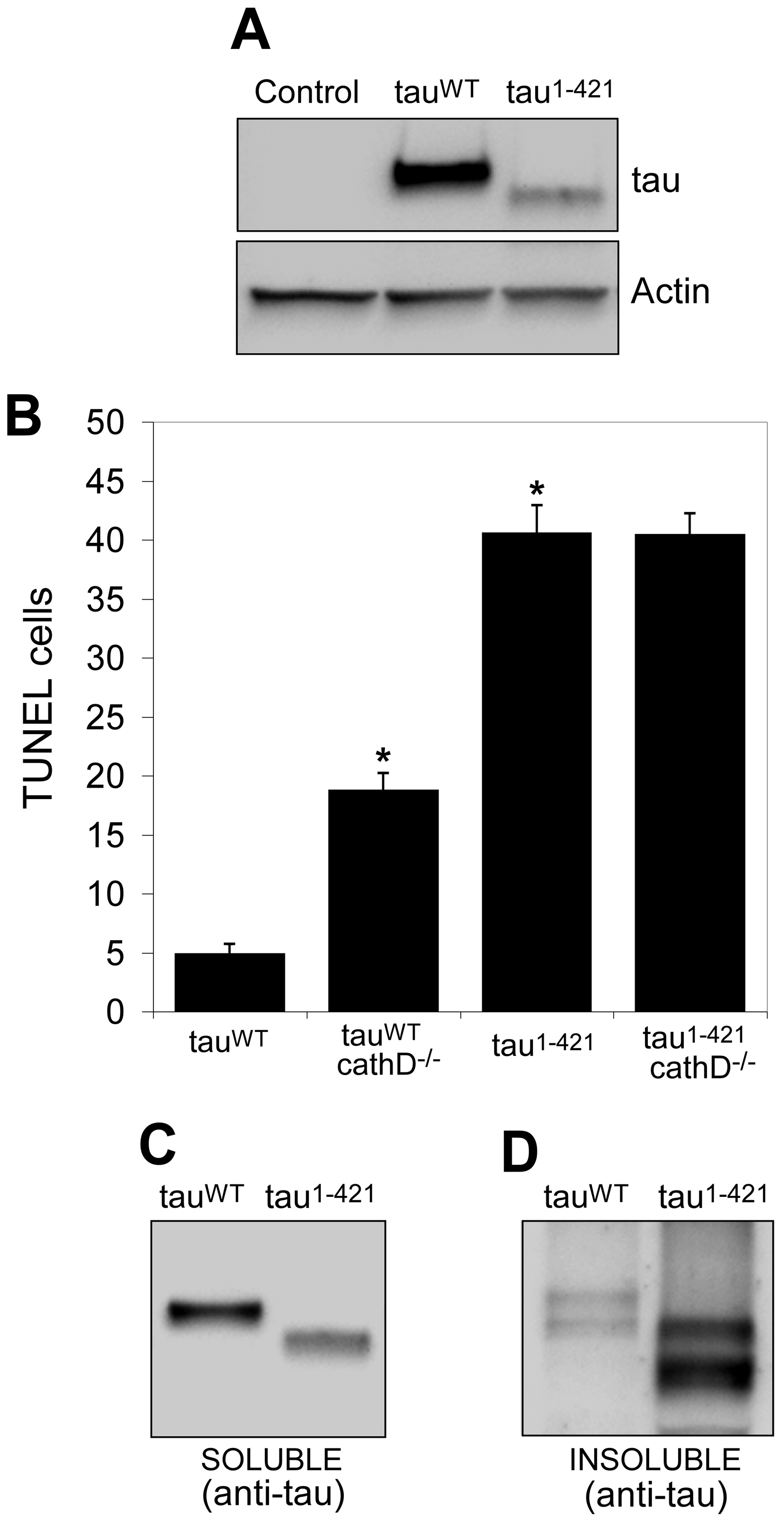 Truncation of tau significantly increases neurotoxicity and decreases solubility <i>in vivo</i>.