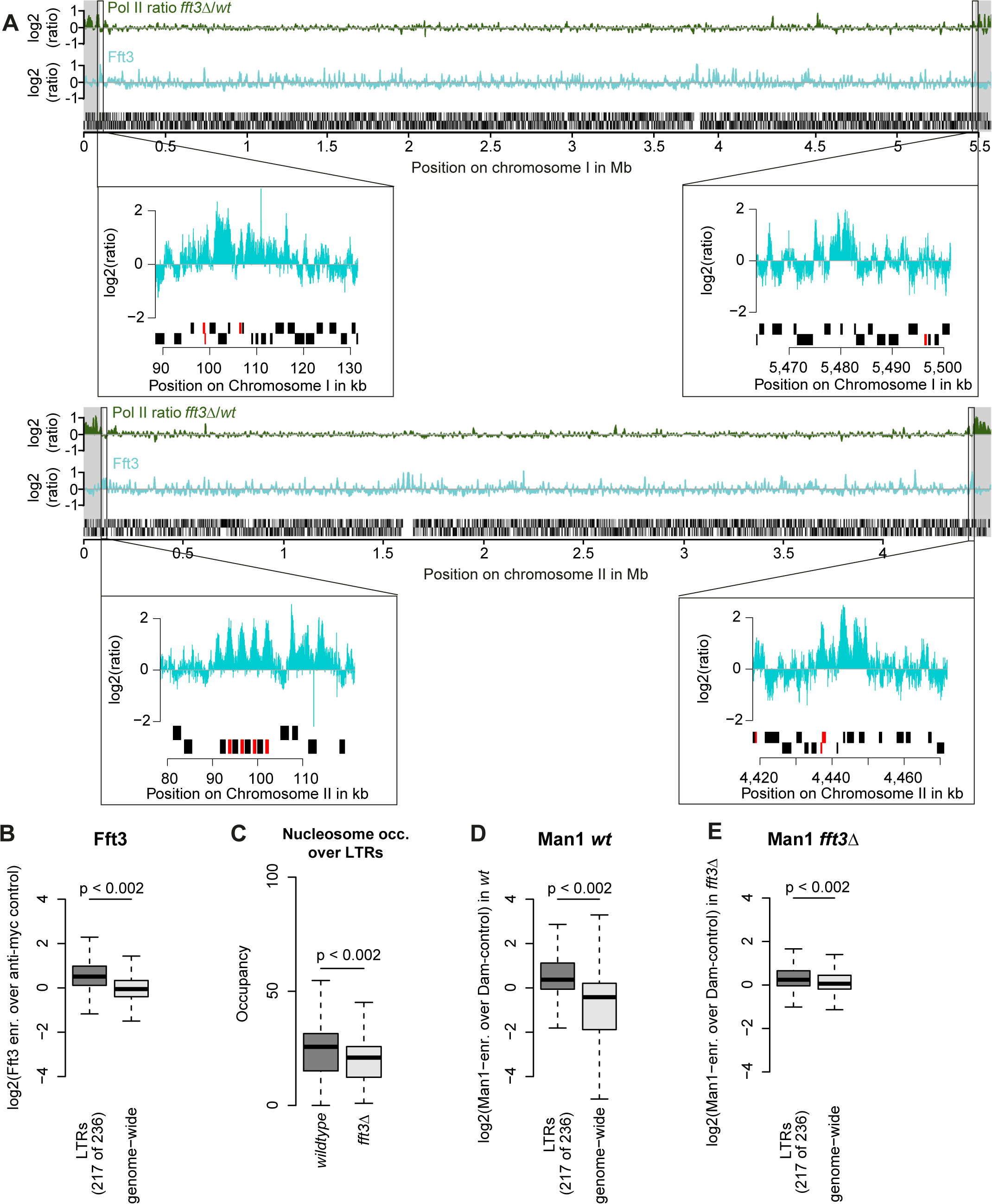 Fft3 binds LTR elements at subtelomeric borders and genome-wide, affecting nucleosome occupancy and peripheral positioning.