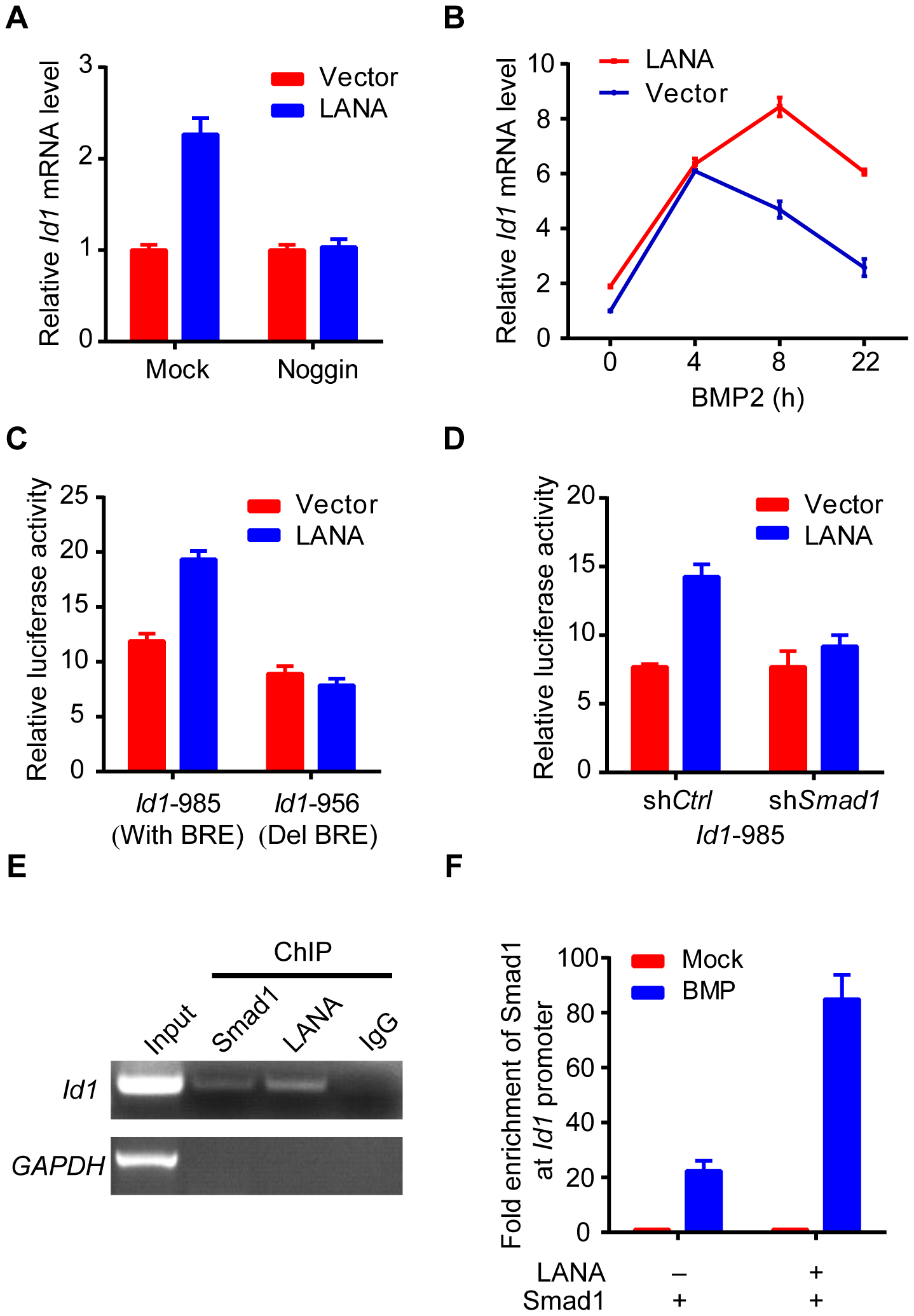 LANA up-regulated Id1 transcription in a BMP-Smad1 dependent manner.