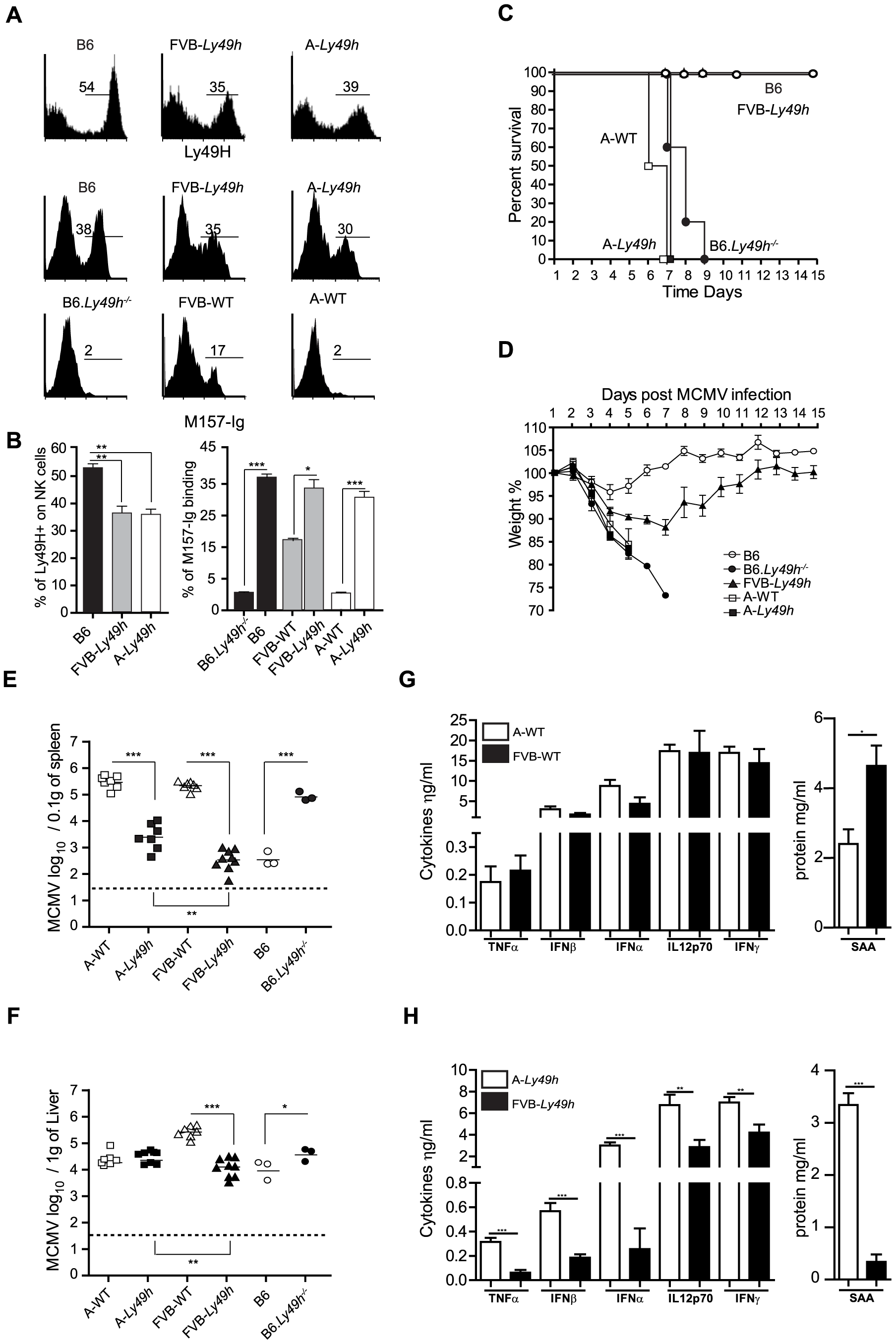 Ly49H expression by NK cells does not rescue A/J mice from lethal MCMV infection.