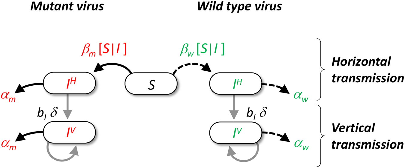 Schematic representation of the pathogen life cycle.
