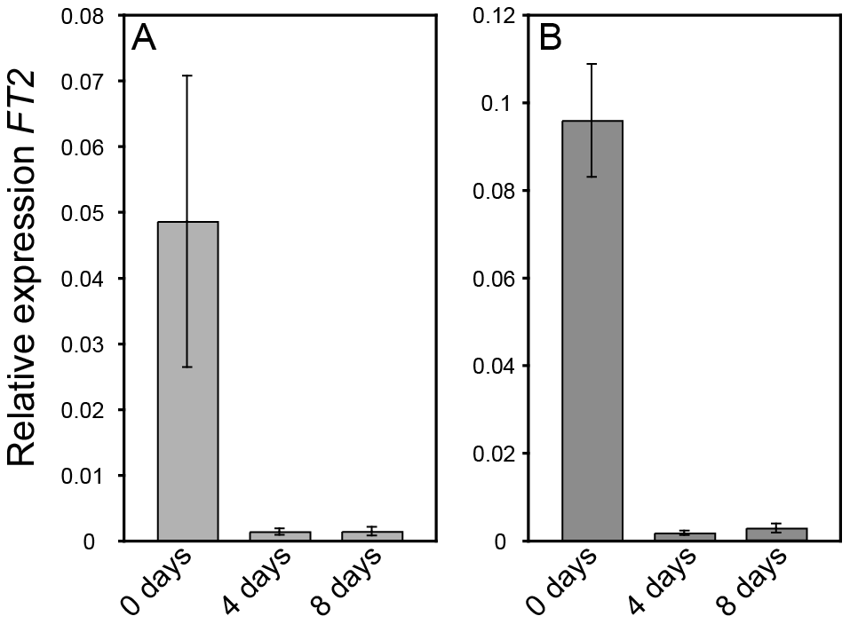 <i>FT2</i> expression is rapidly downregulated in wild type (T89) and <i>AIL1</i>oe after transfer to short days.