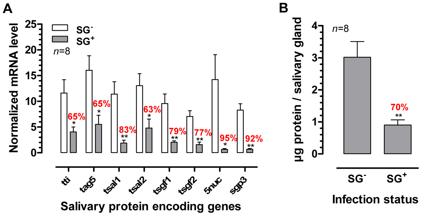 Effects of the <i>T. brucei</i> salivary gland infection on tsetse fly salivary protein expression.