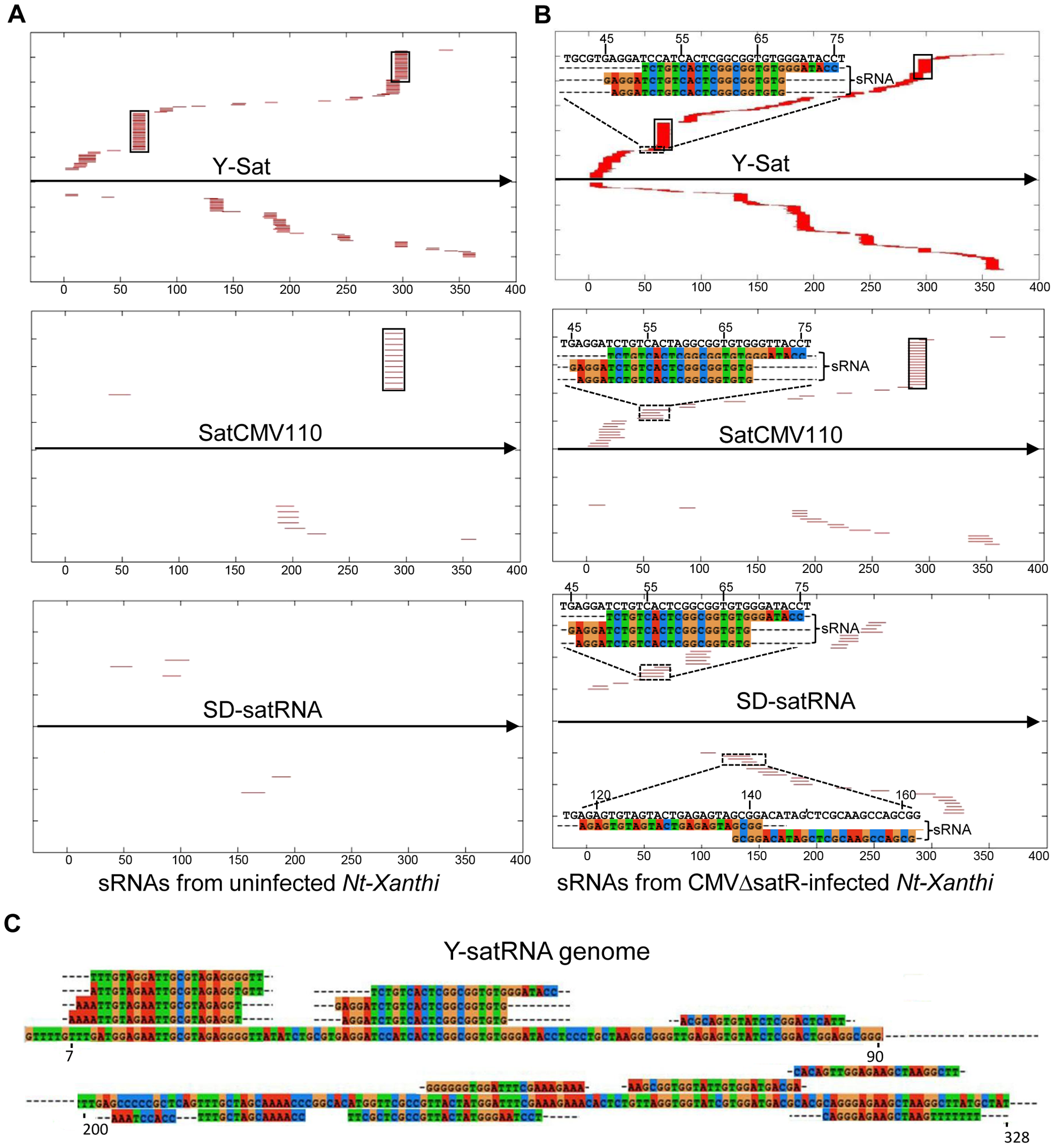 Alignment of sRNAs to three CMV satRNA genome sequences at the E-value of 1e<sup>−3</sup> (A and B) and 1e<sup>−5</sup> (C).