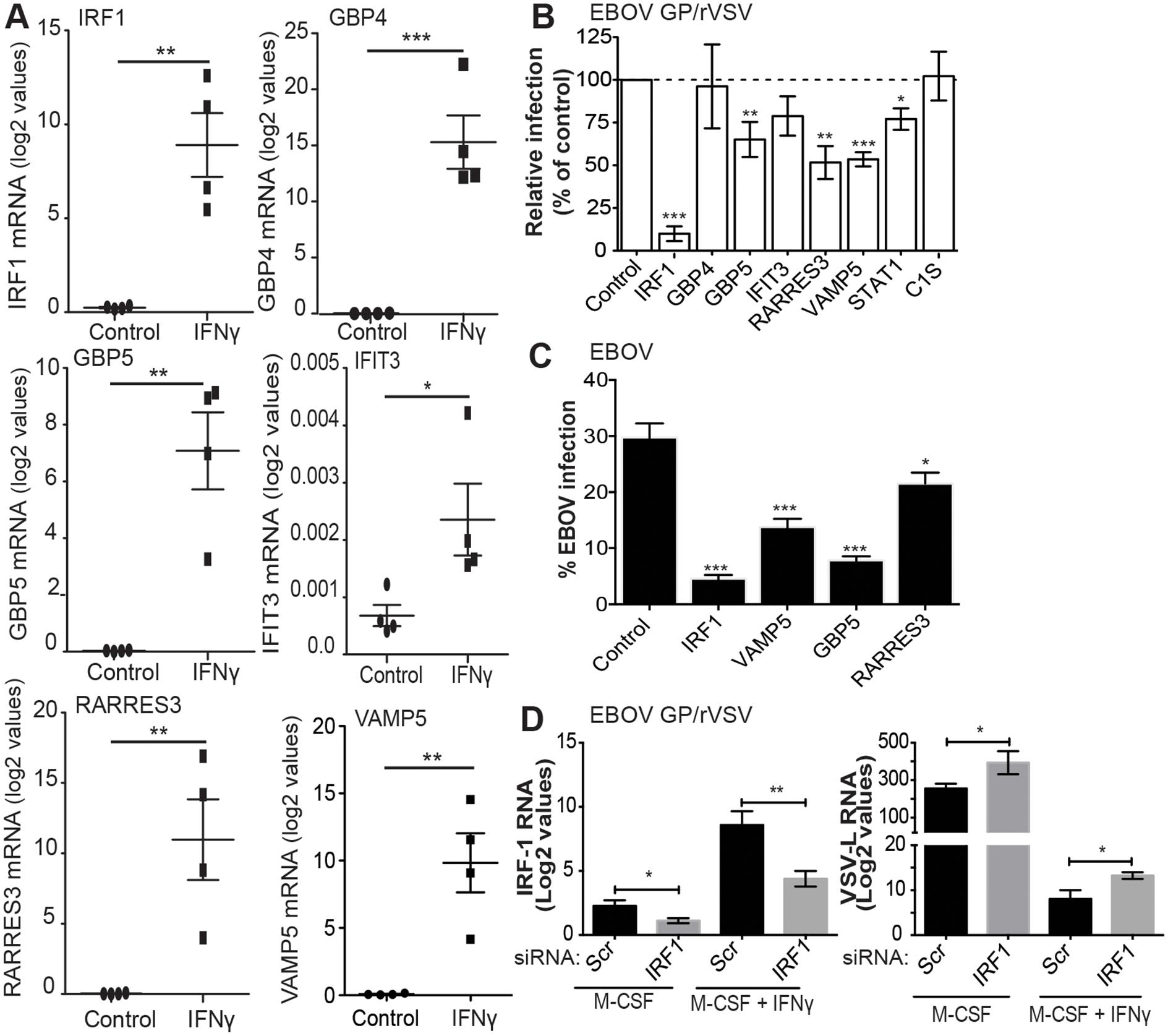 Identification of IFNγ-stimulated genes that inhibit EBOV infection.