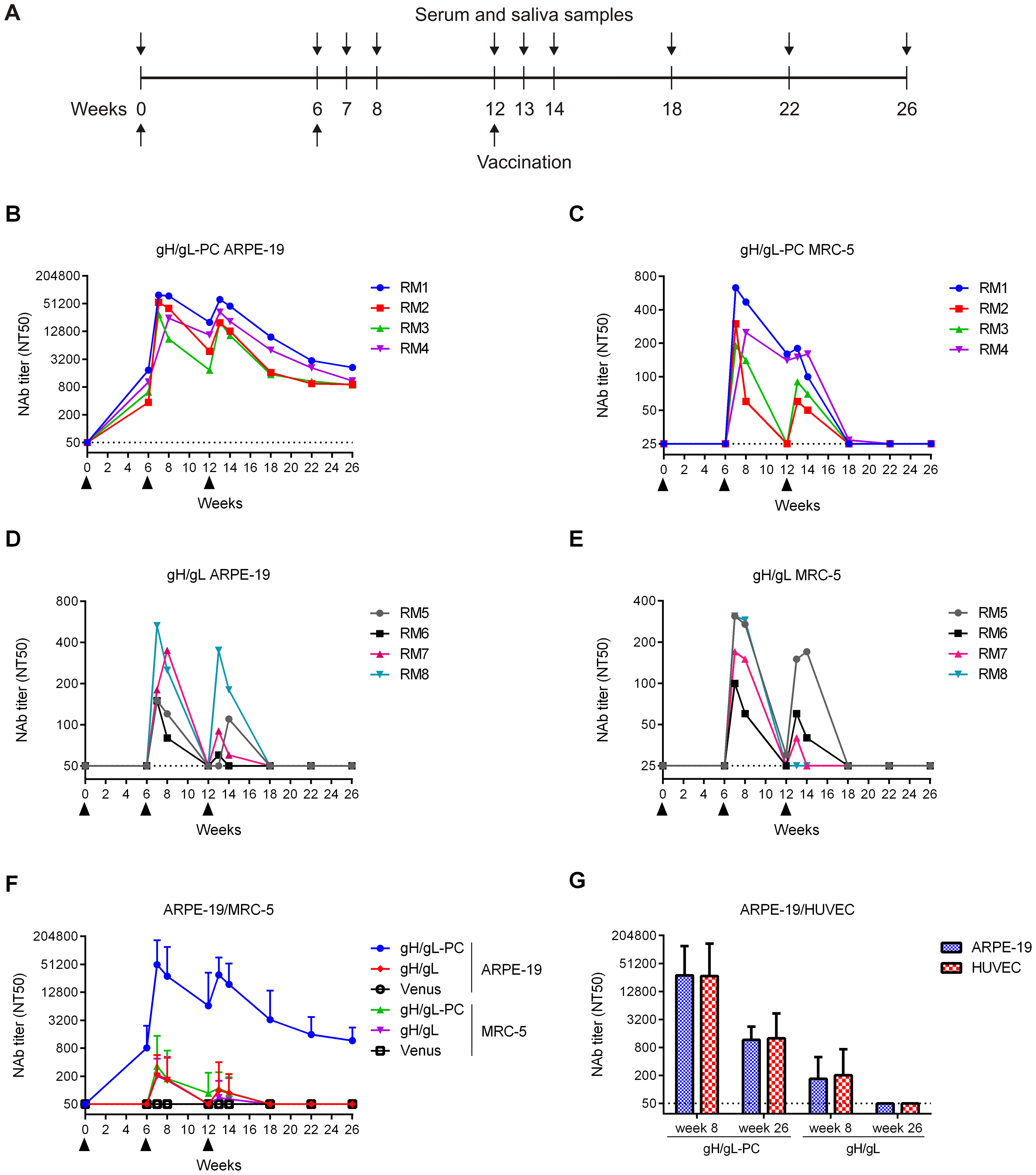 HCMV-specific serum NAb titers in vaccinated RM.