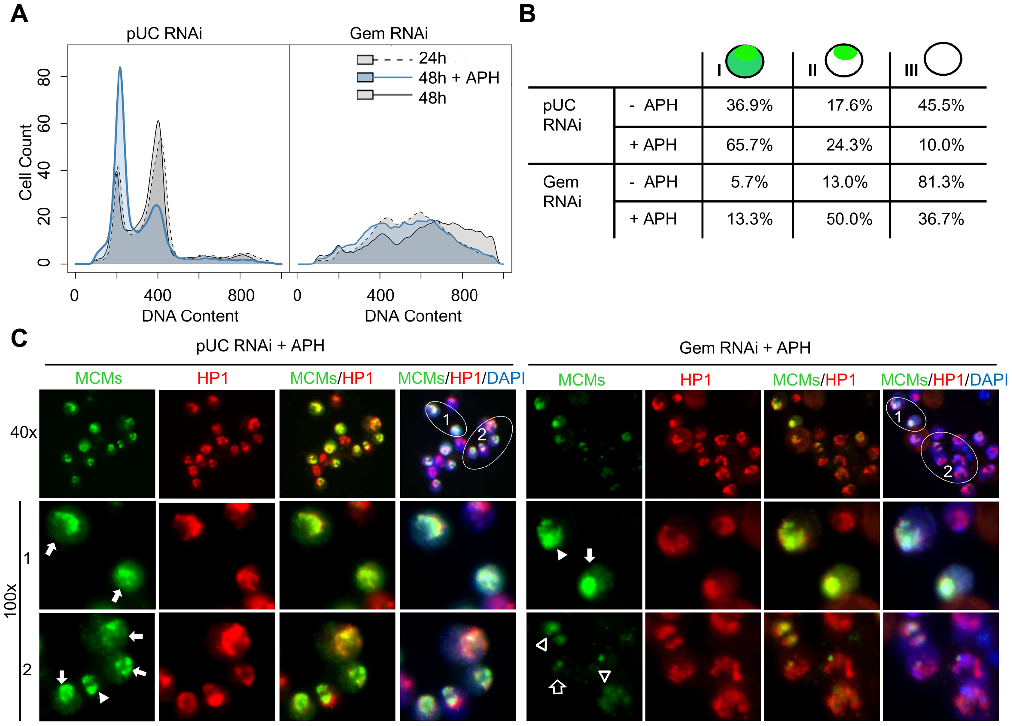 MCMs are preferentially loaded onto heterochromatin in the absence of geminin.