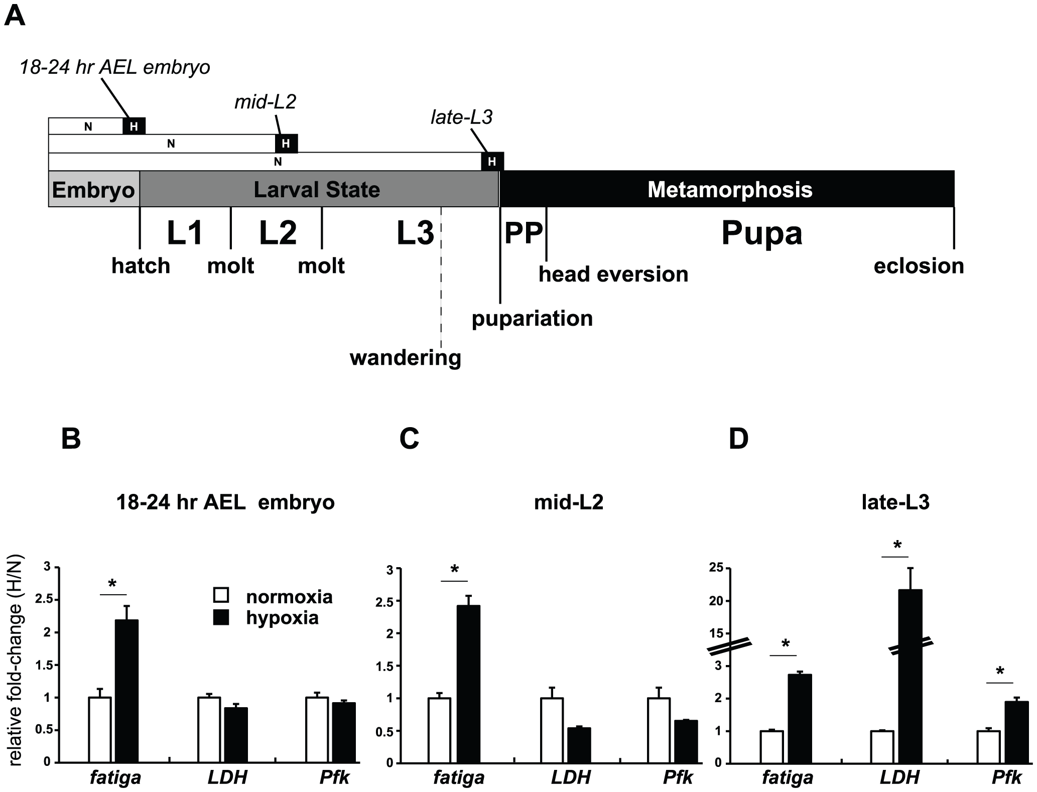 Temporal-dependent hypoxic responses.