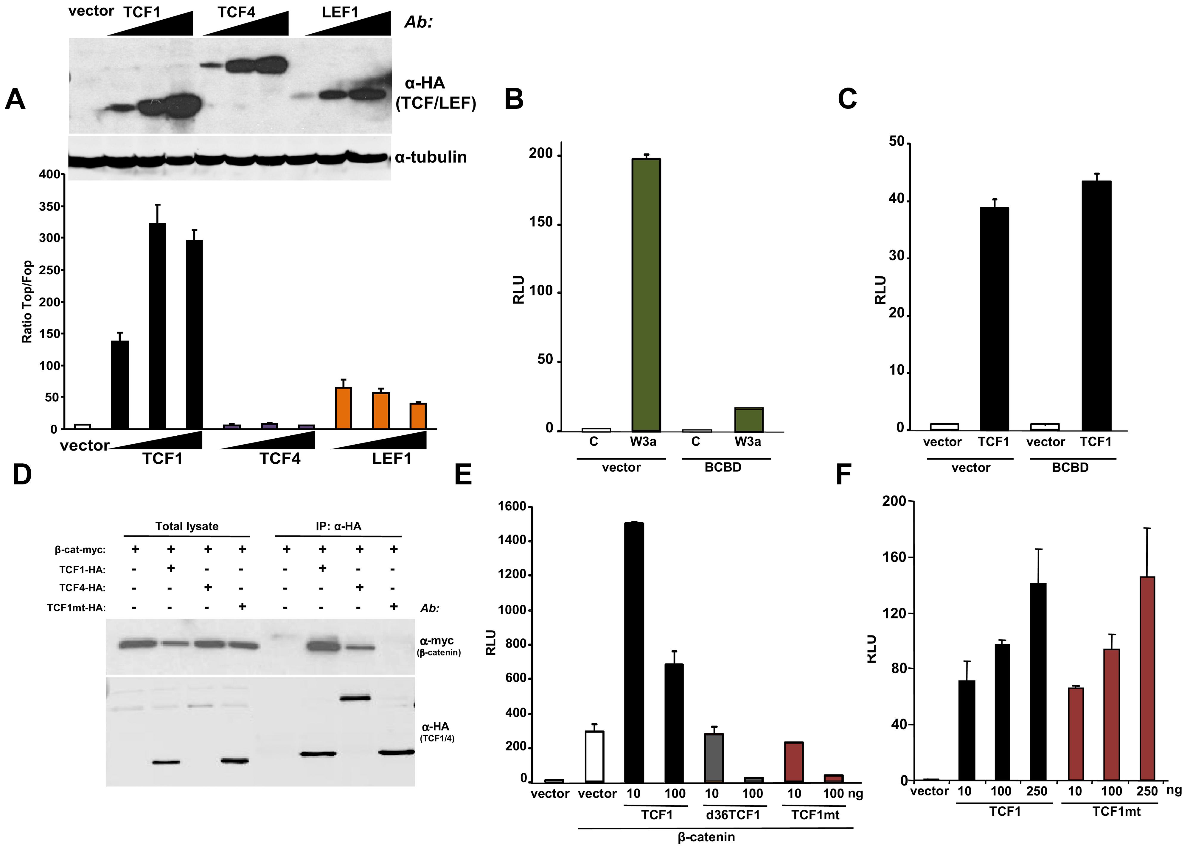β-catenin-independent transcriptional activity of TCF1/LEF1 factors.