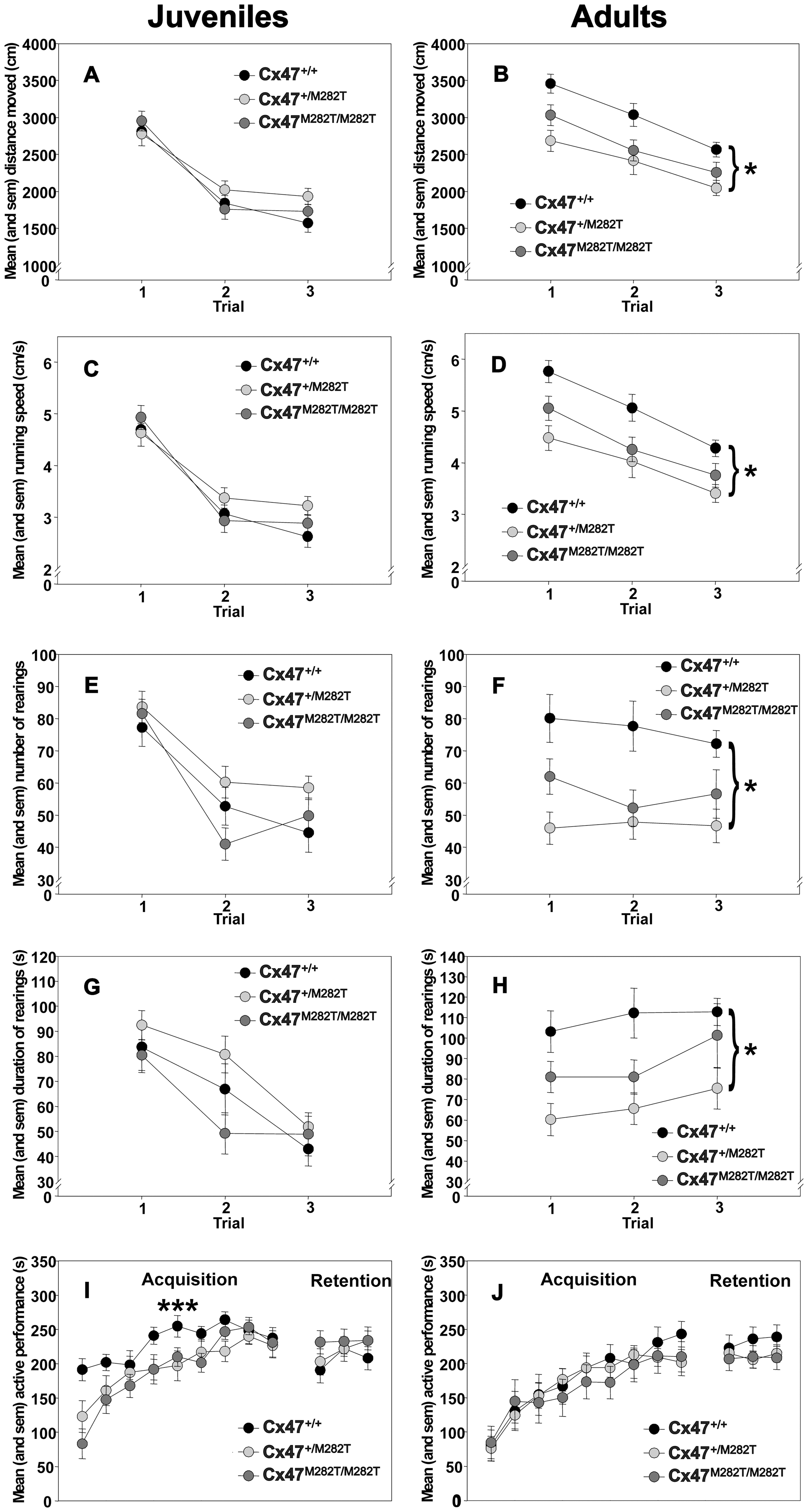 Open-field behavior and rotarod performance of juvenile (23 days) and adult (3 months) <i>Cx47<sup>M282T/M282T</sup></i>, <i>Cx47<sup>+/M282T</sup></i>, and <i>Cx47<sup>+/+</sup></i> mice.