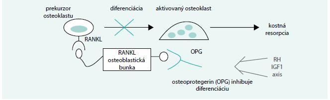 Schéma. Úloha RH a IGF1 v systéme RANK-RANKL-OPG