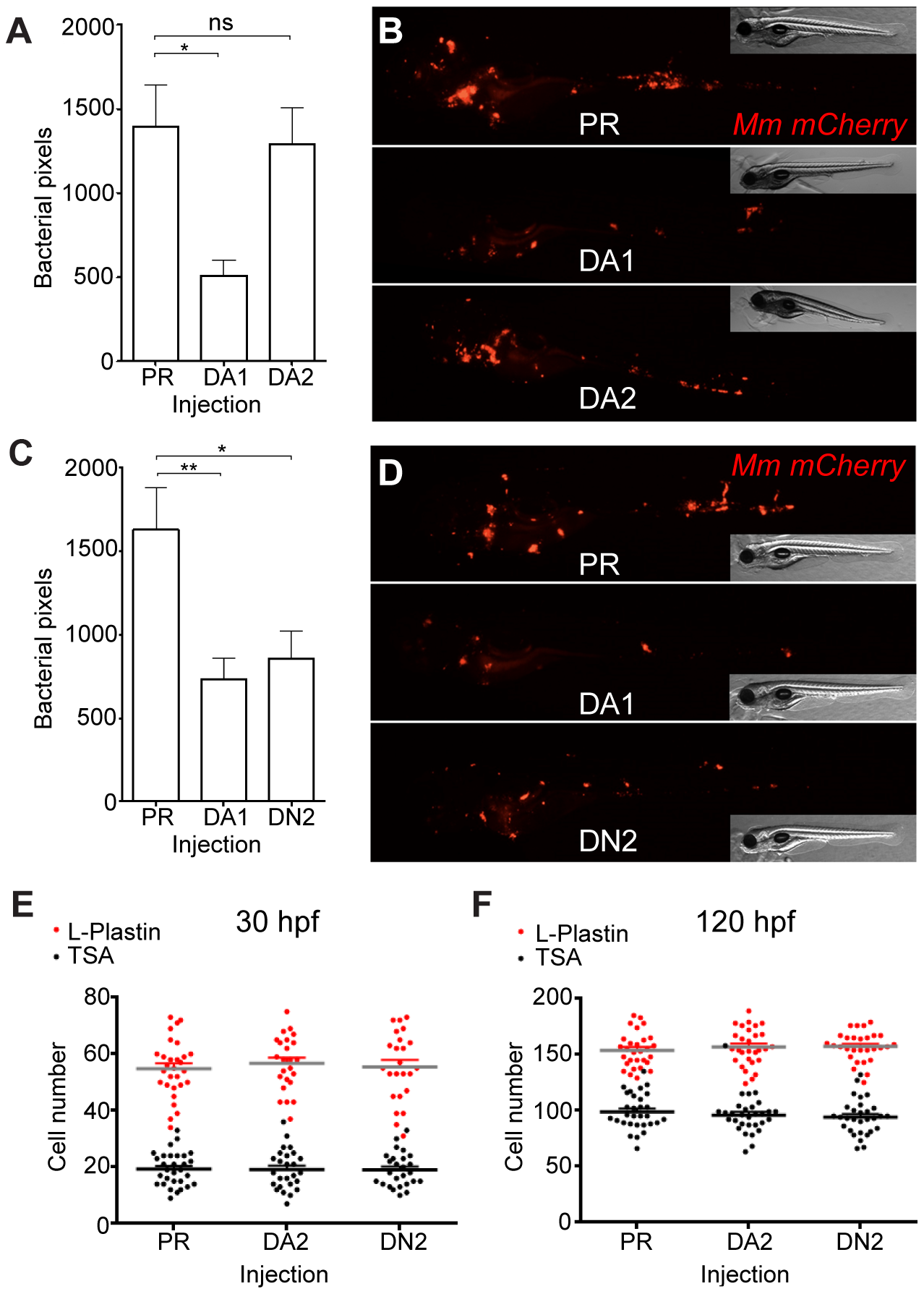 Hif-2α has opposing effects on bacterial burden than Hif-1α.