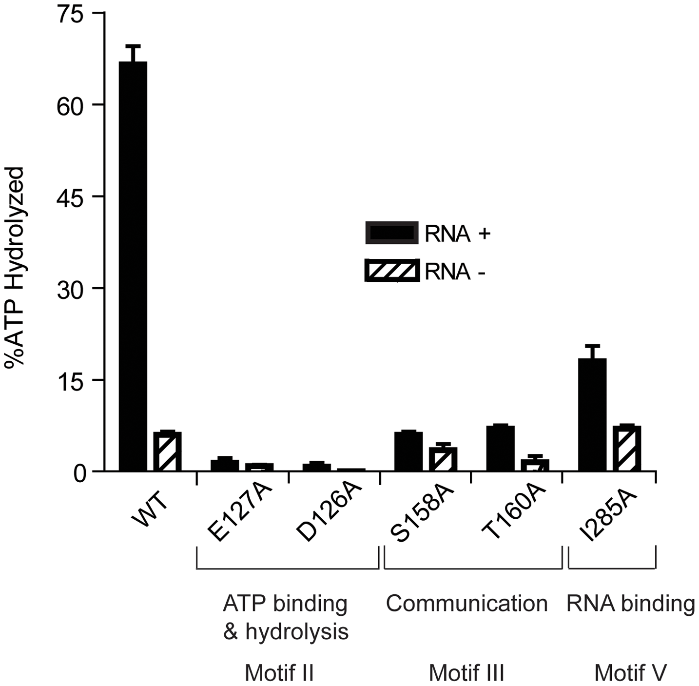 ATP Hydrolysis by wild-type and mutant HrpA proteins.