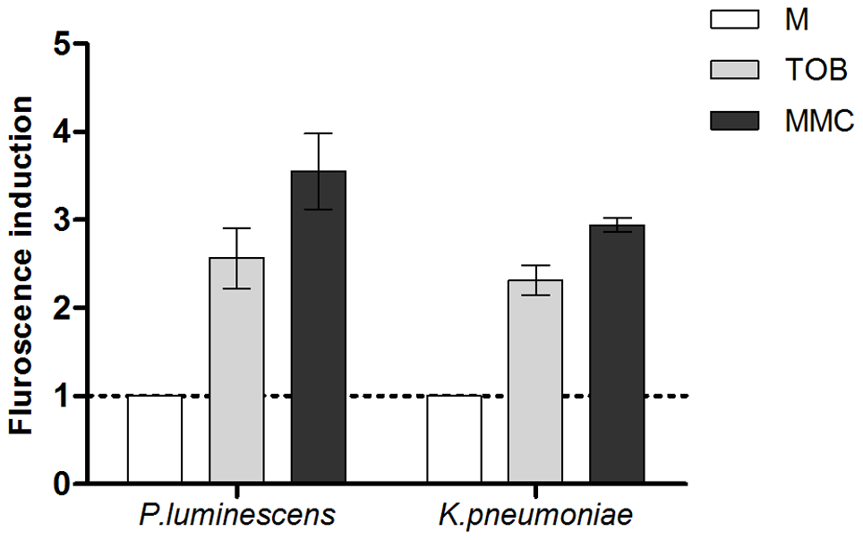 Sub-MIC aminoglycosides induce SOS in other pathogens.