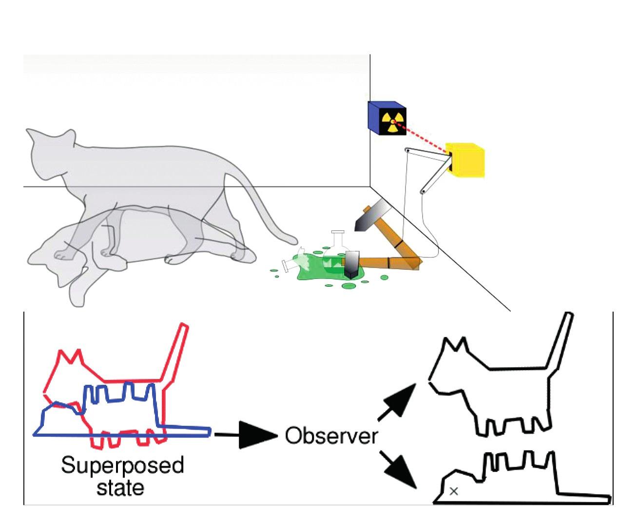 Superponovaný obraz mačky z dvoch možností, ktoré sú najpravdepodobnejšie – vľavo; pozorovaním overovaná skutočnosť – vpravo superpozícia v makrosystéme podľa Schrödingera (3 – so súhlasom autora). Mačka môže spustiť smrtiaci mechanizmus, ale aj nemusí. Prichádzame ku klietke so superponovanou predstavou možností, ale po vzhliadnutí sa superpozícia zmení vizuálnym pozorovaním v realitu.