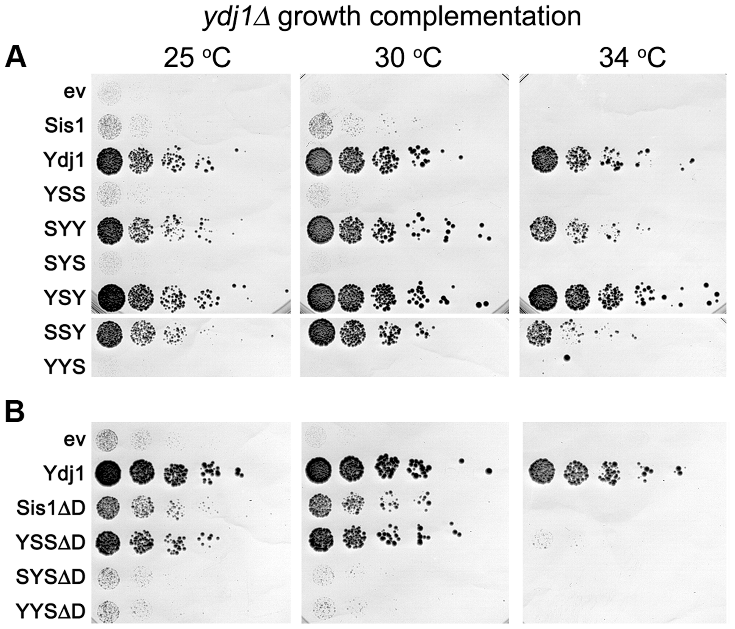 Growth complementation by Sis1/Ydj1 hybrids in place of Ydj1.
