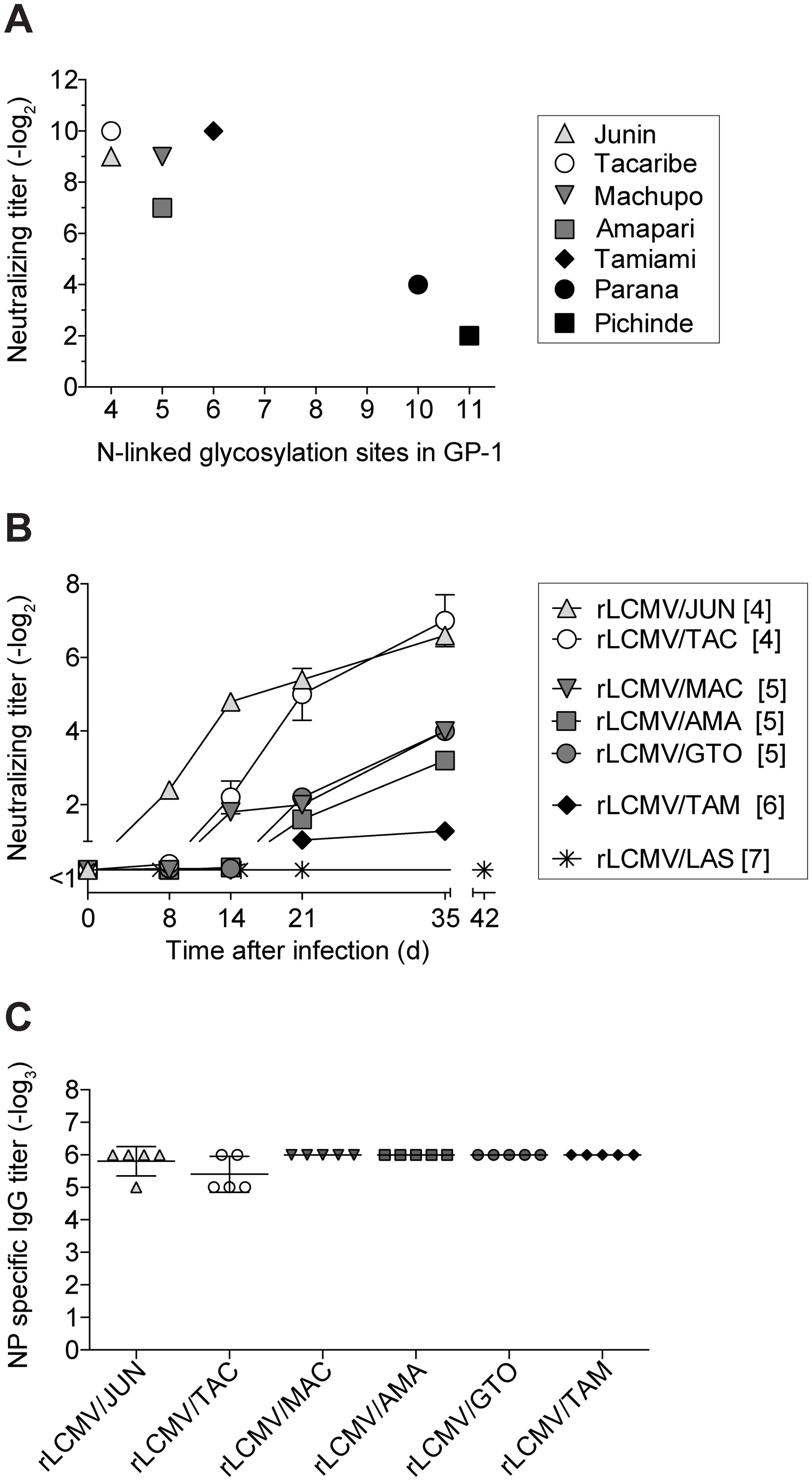 nAb response kinetics against Clade B arenavirus envelopes correlate with GP-1 glycan density.