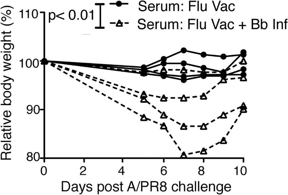 Vaccination of Bb-infected mice fails to induce protective anti-viral antibody responses