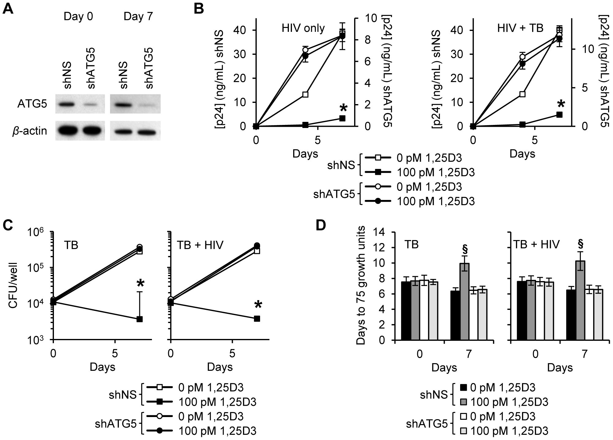 1,25D3 inhibition of HIV and <i>M. tuberculosis</i> is ATG5 dependent.
