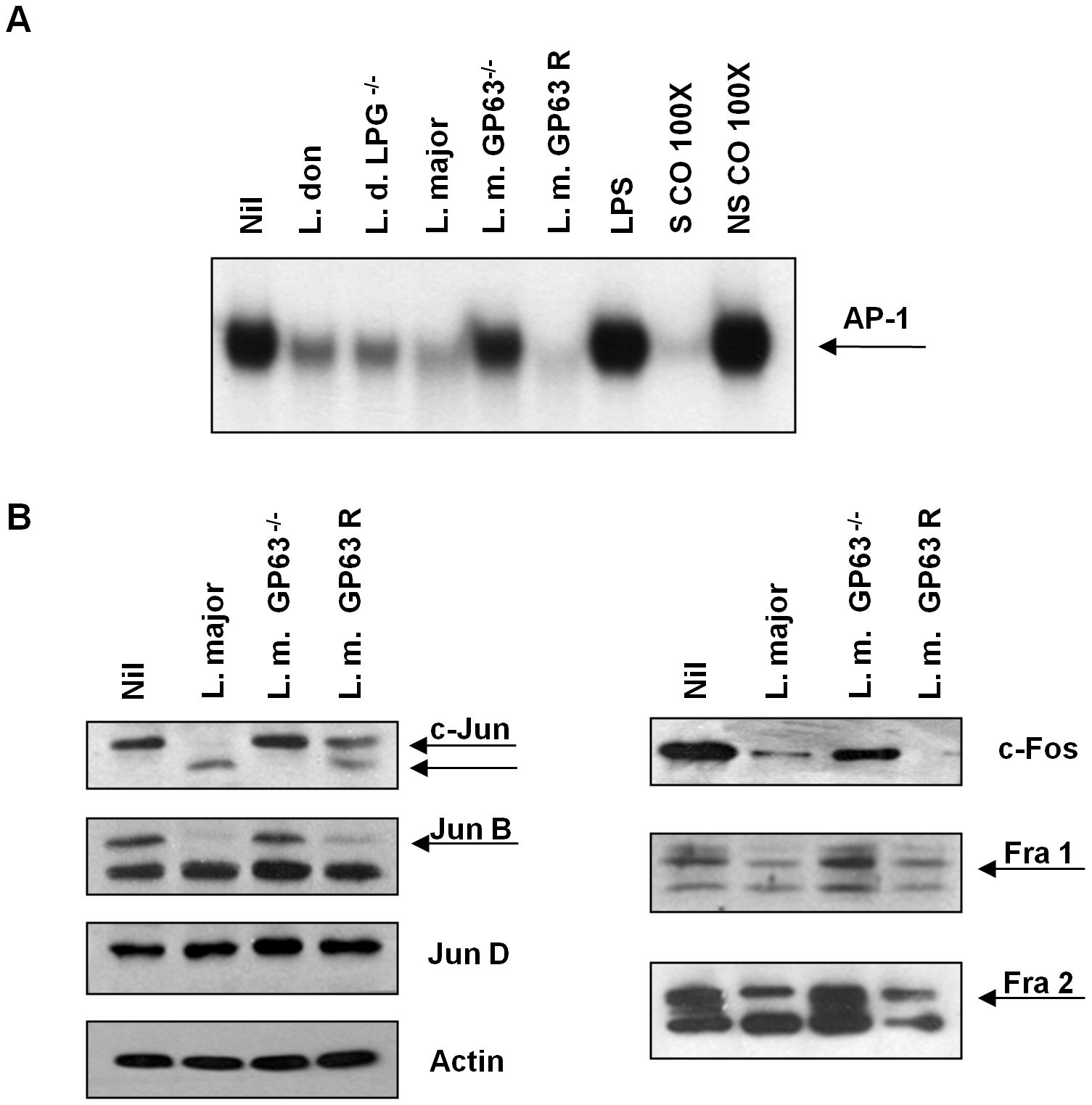 Role of <i>Leishmania</i> surface molecules in the inactivation of AP-1.