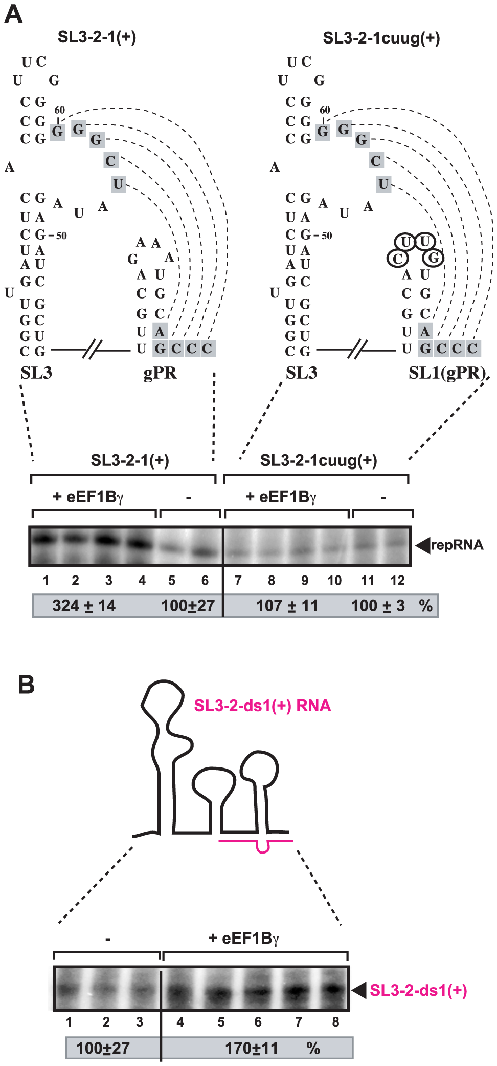 eEF1Bγ stimulates the RdRp activity of a viral polymerase on a TBSV template <i>in vitro</i>.