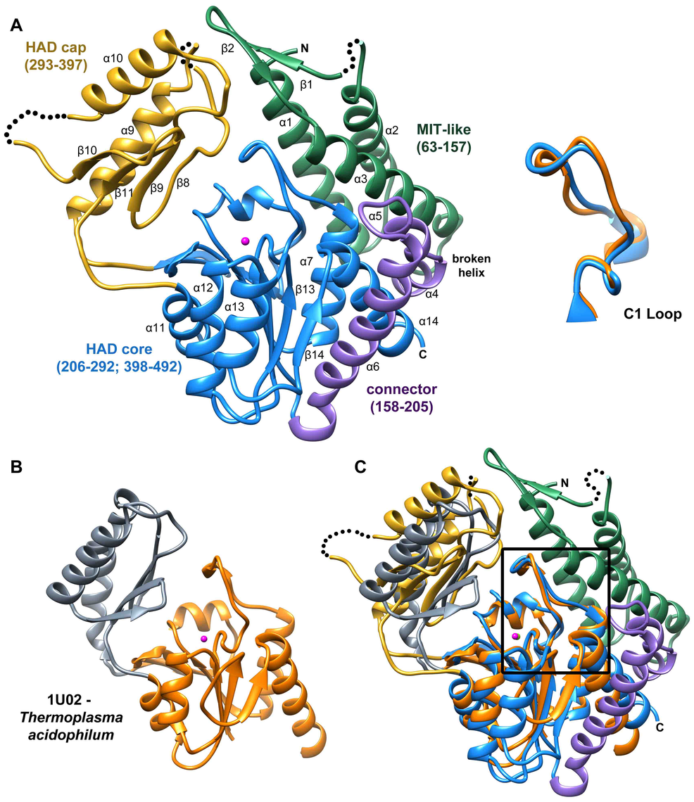 Structure of <i>B. malayi</i> T6PP and ortholog.
