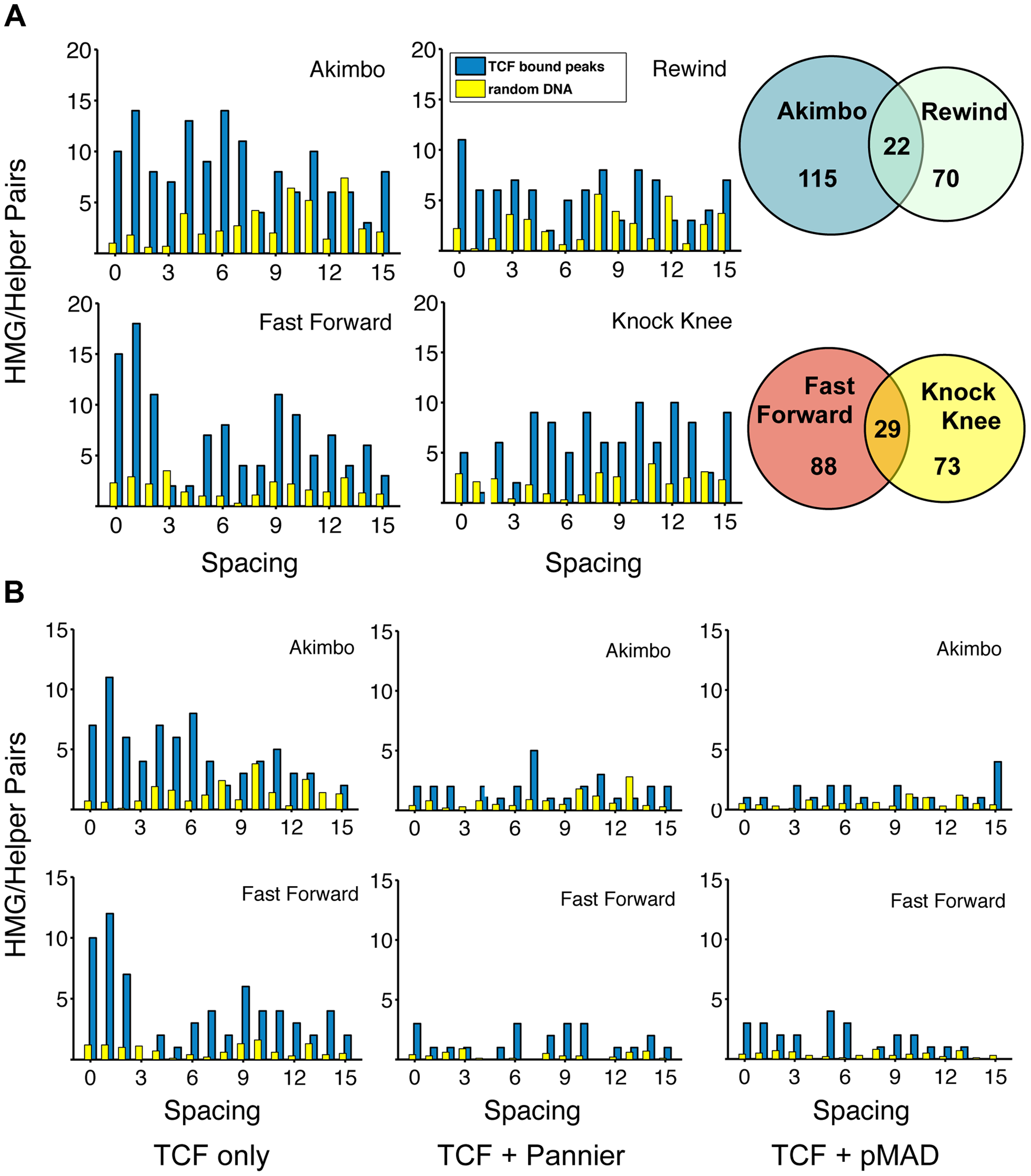 TCF/Pan-bound chromatin is enriched for HMG-Helper site pairs.