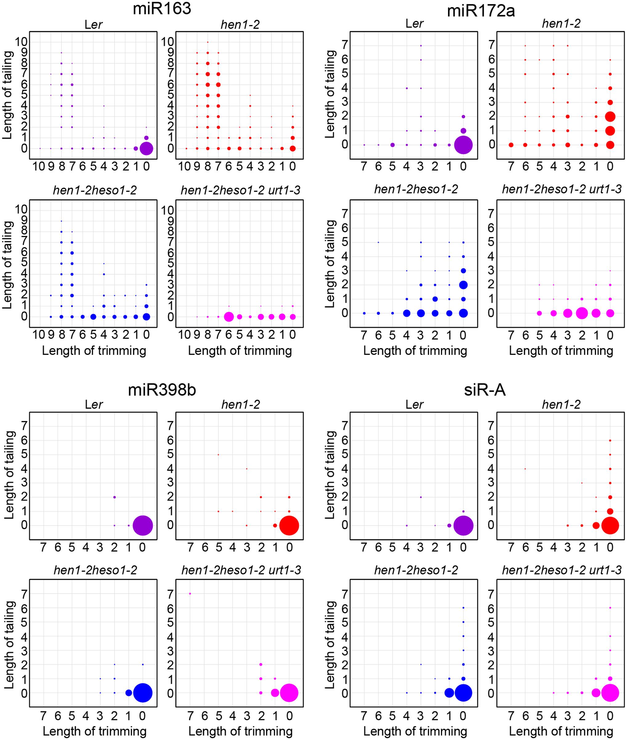 <i>urt1-3</i> affects miRNAs but not siRNAs uridylation in <i>hen1-2 heso1-2</i>.