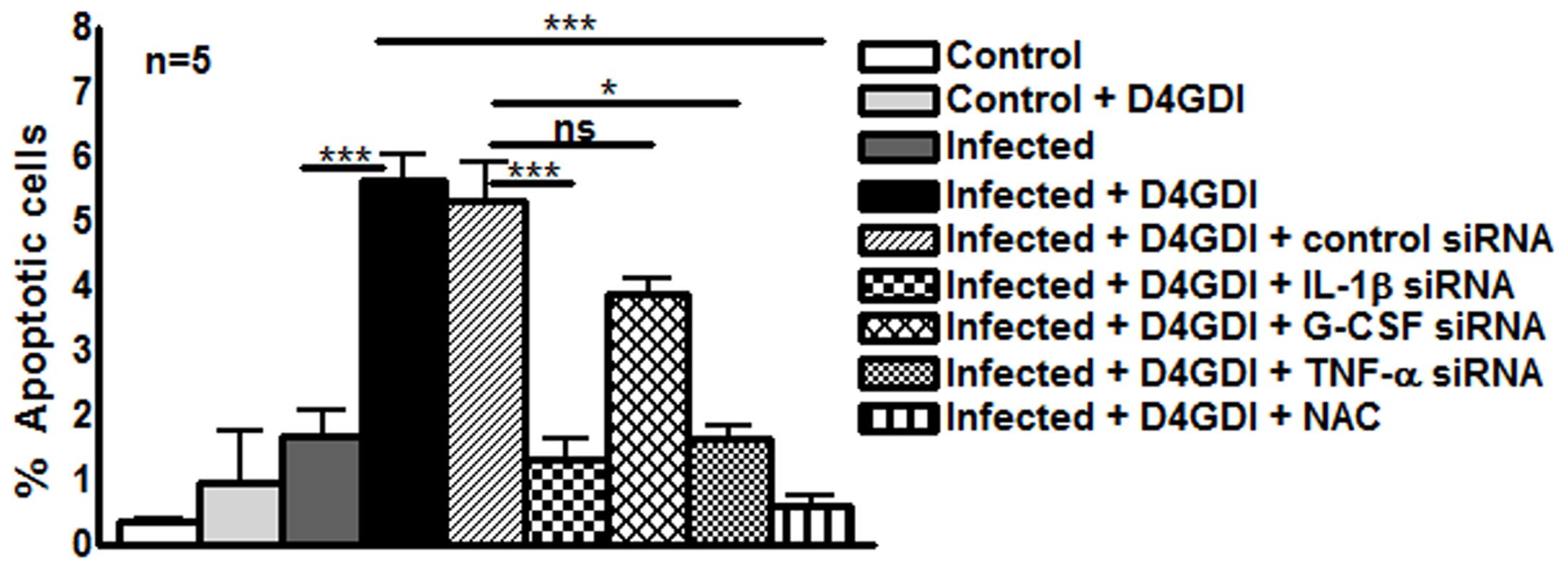 D4GDI enhances apoptosis of <i>M. tb</i>-infected MDMs.