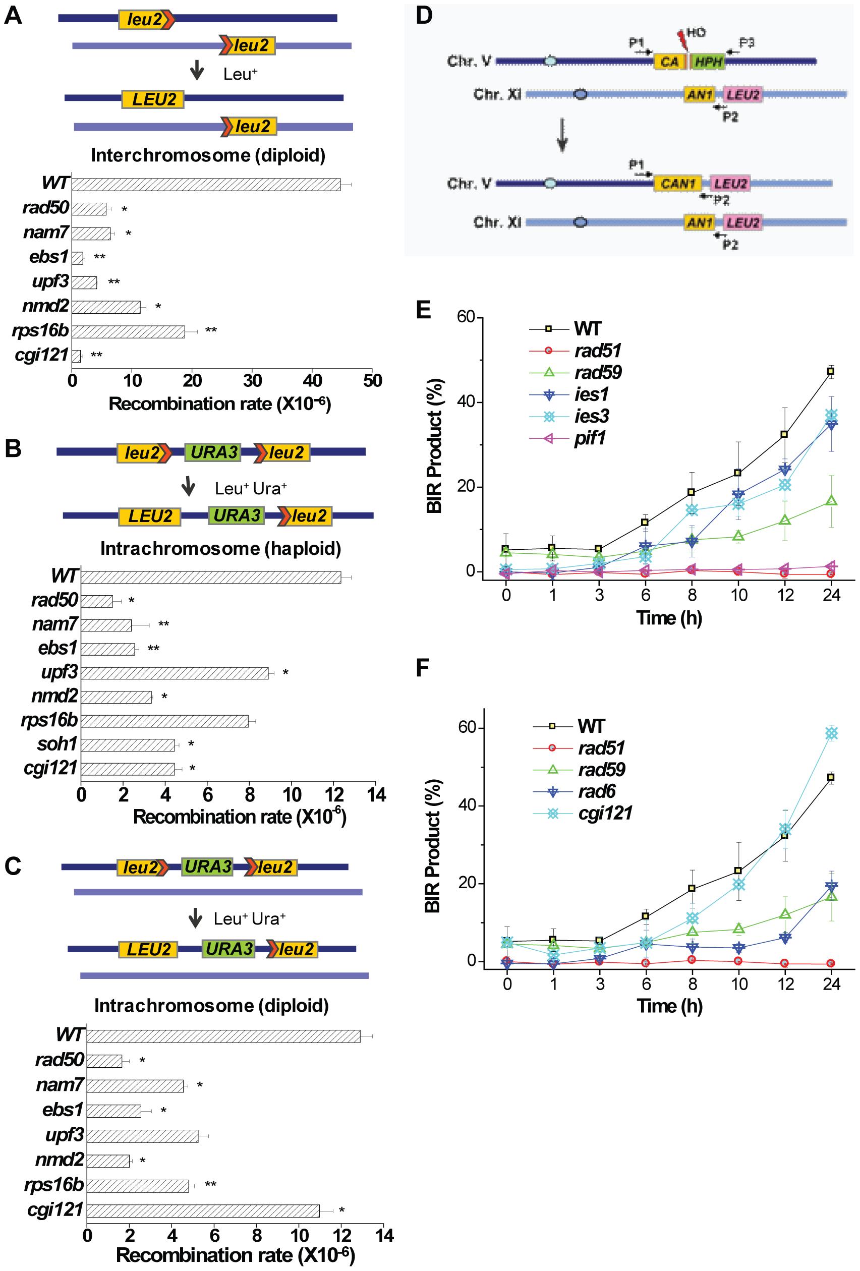 General homologous recombination activities in <i>nam7</i>Δ, <i>ebs1</i>Δ, <i>upf3</i>Δ, <i>nmd2</i>Δ, <i>rps16b</i>Δ, <i>soh1</i>Δ, and <i>cgi121</i>Δ mutants, and break-induced-replication efficiencies in <i>ies1</i>Δ, <i>ies3</i>Δ, <i>pif1</i>Δ, <i>rad6</i>Δ, and <i>cgi121</i>Δ mutants.