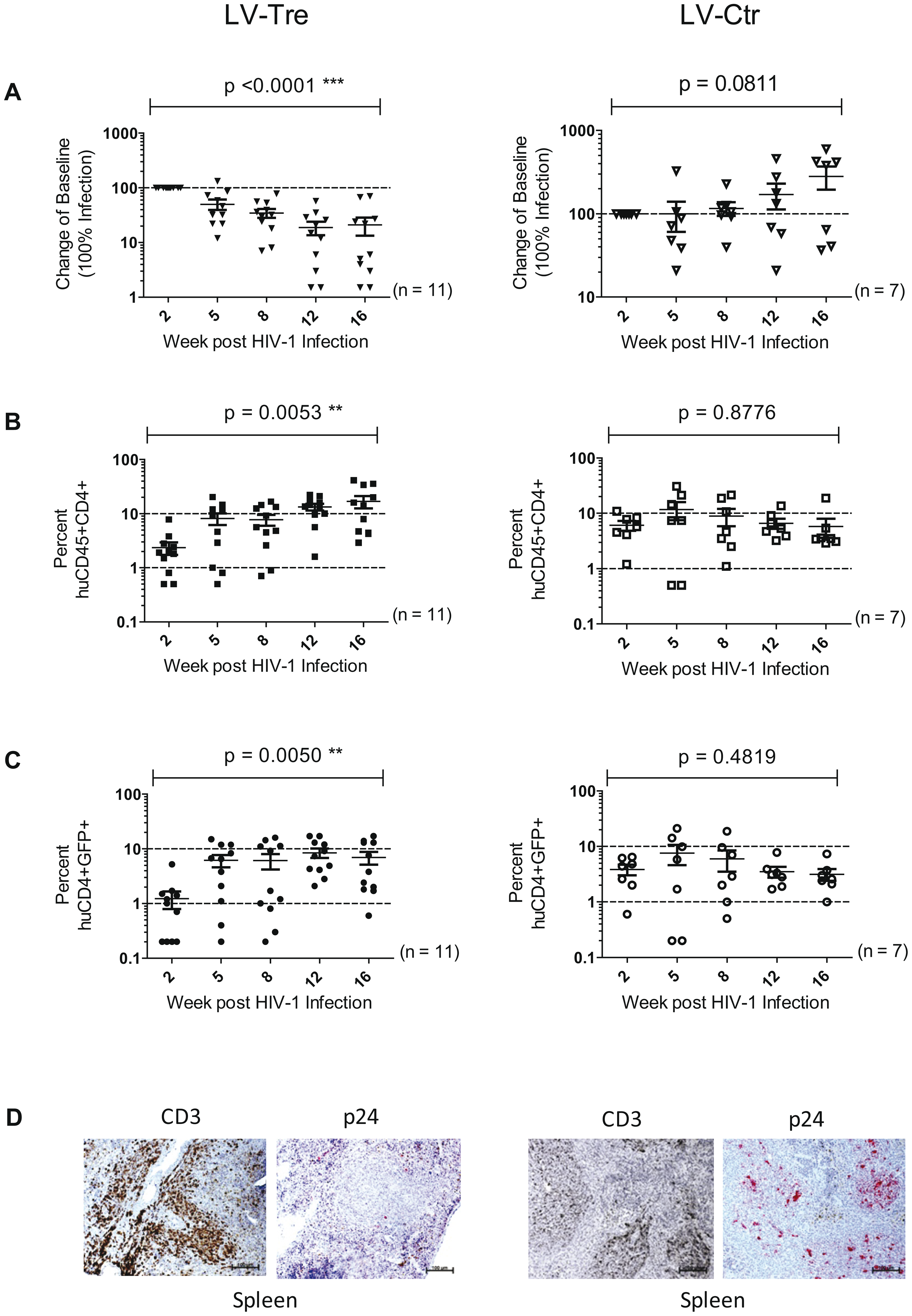 Analysis of the HIV-1 infected mice engrafted with LV-transduced (LV-Tre or LV-Ctr) unselected human CD4<sup>+</sup> T cell pools.