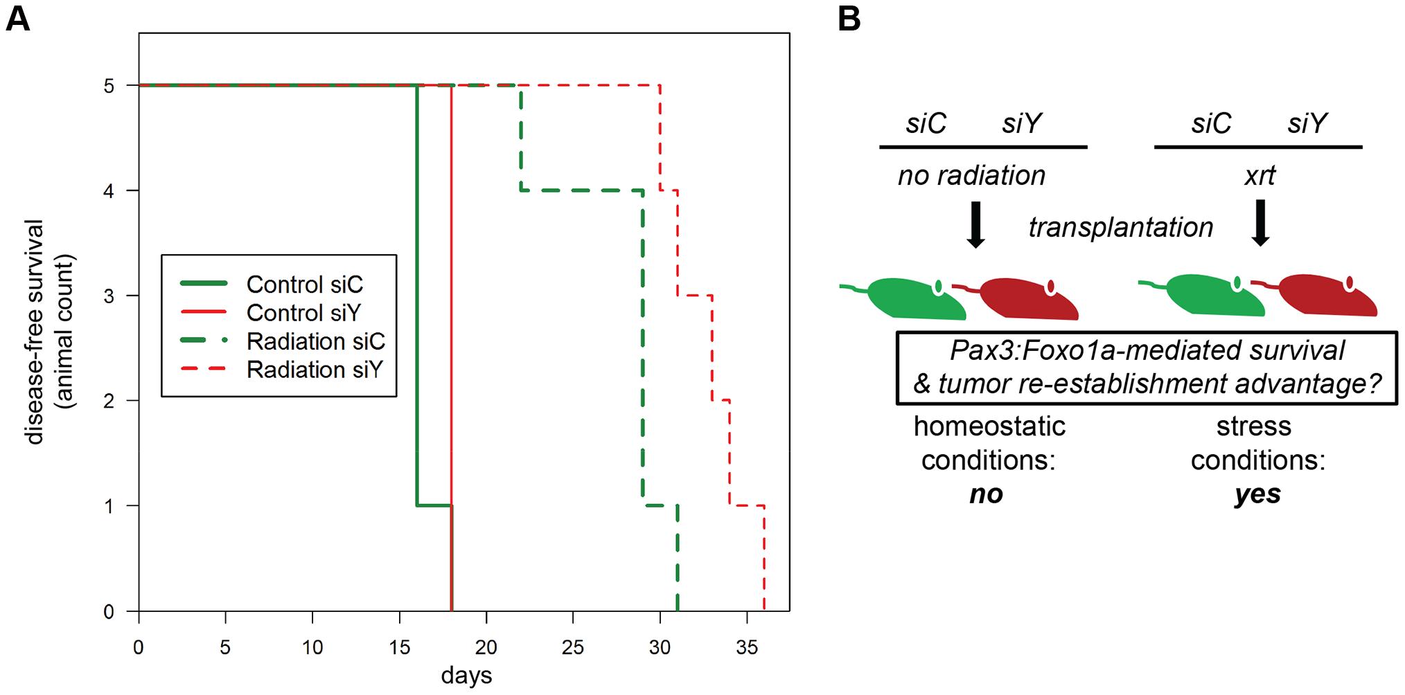 Treatment-related implications for dynamic oncogene expression in rhabdomyosarcoma <i>in vivo</i>.