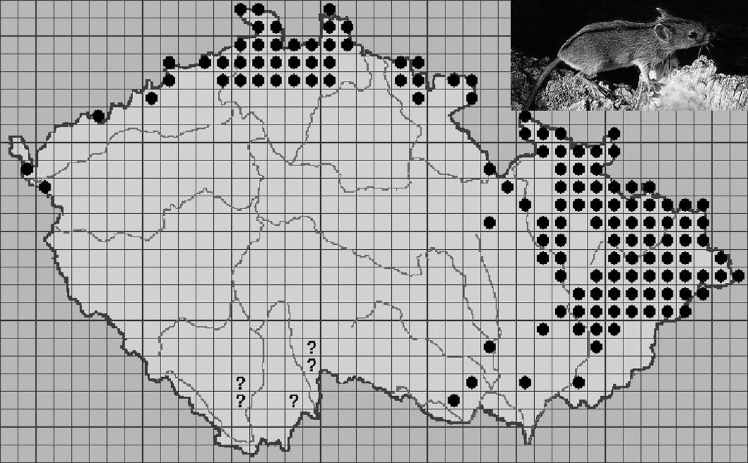 Mapa rozšíření Apodemus agrarius v ČR. Anděra, M., Biolib, 2008. ● - stálý výskyt ? - problematické/pochybné/nedoložené údaje Fig. 2. Map of spread of Apodemus agrarius in CR. Andera M., Biolib, 2008. ● – permanent occurrence ? – problematic/ doubtful/not-confirmed data