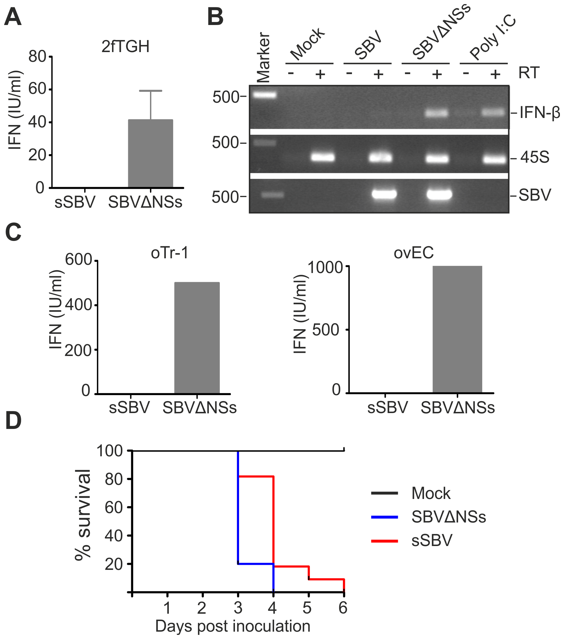 SBVSΔNSs induces the production of IFN.