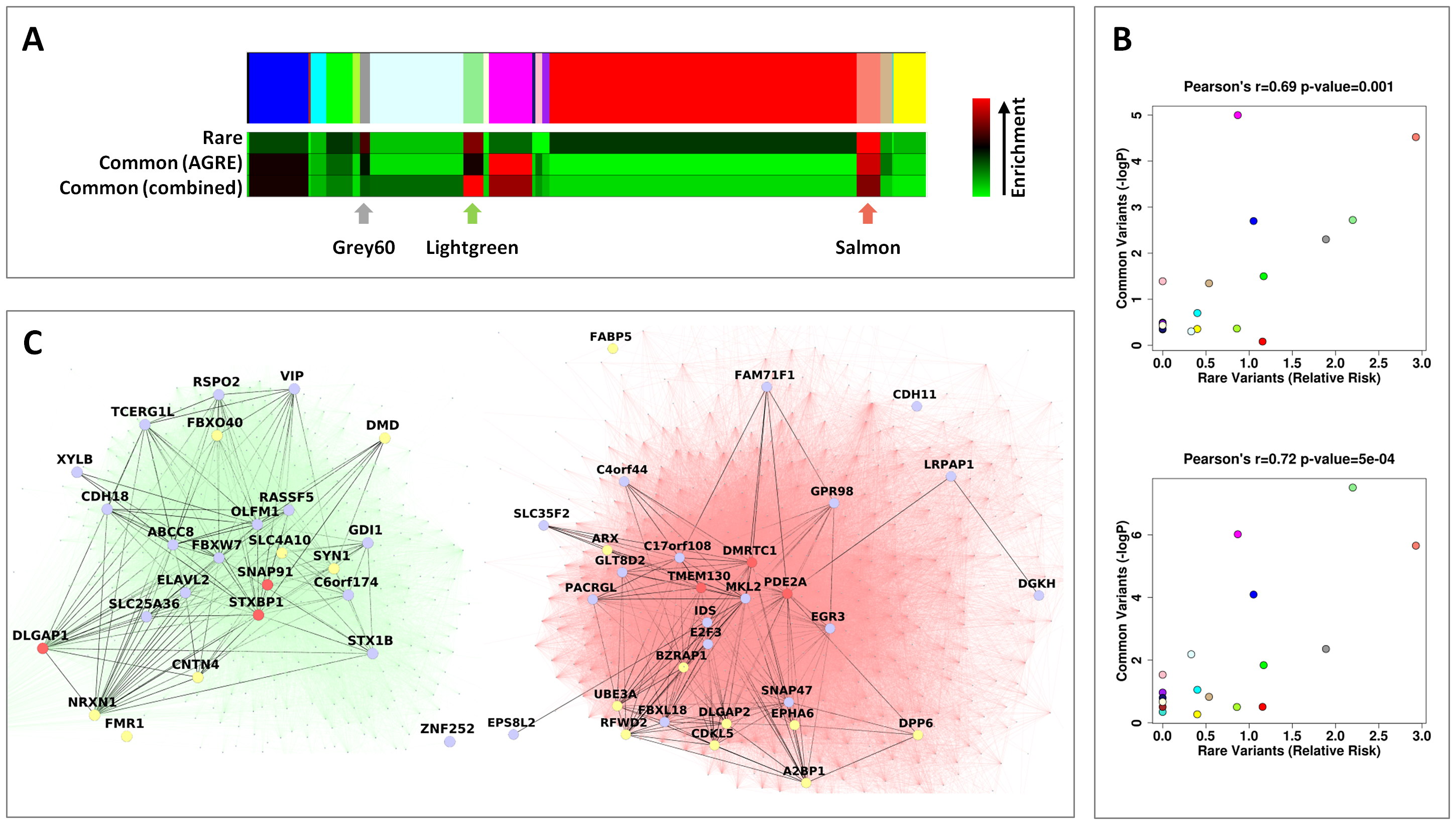 Rare and common variations in ASD perturb shared neuronal modules.