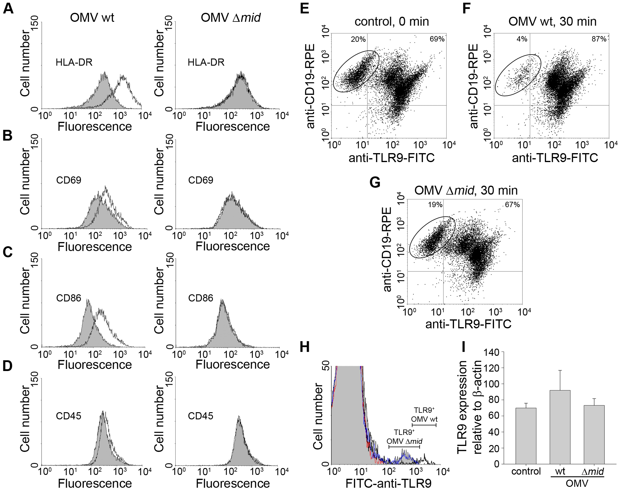 OMV cause up-regulation of B cell surface markers.
