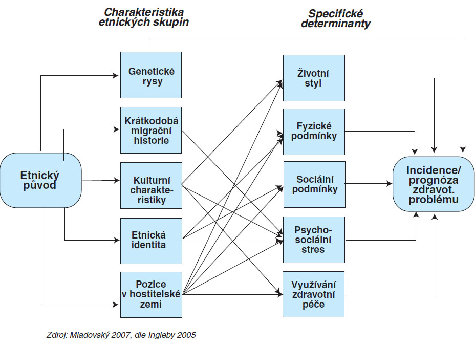 Výkladový model vztahu mezi etnicitou a zdravím