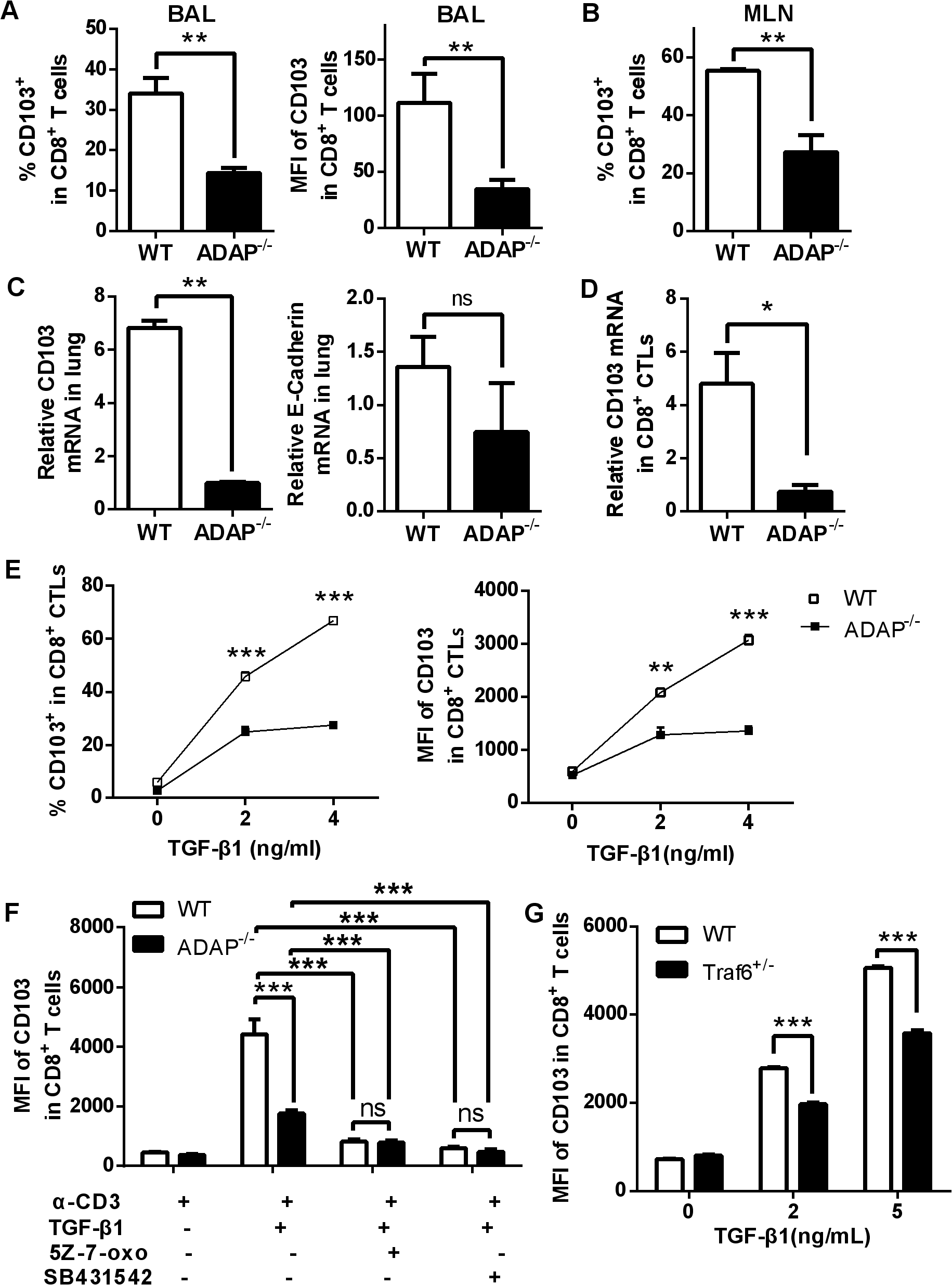 ADAP deficiency reduces TGF-β1-induced CD103 expression in CD8+ T cells.
