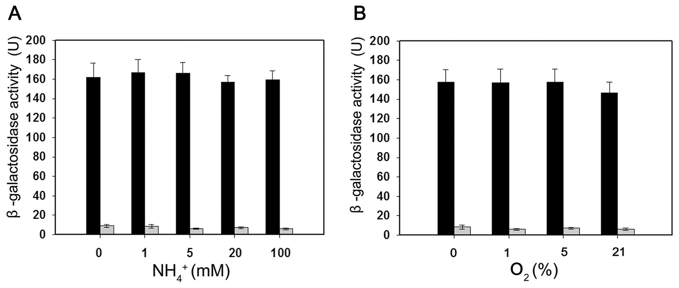 Expression of the <i>Paenibacillus</i> sp. WLY78 P<i>nif</i>B::lacZ promoter fusion is constitutive in <i>E. coli</i>.