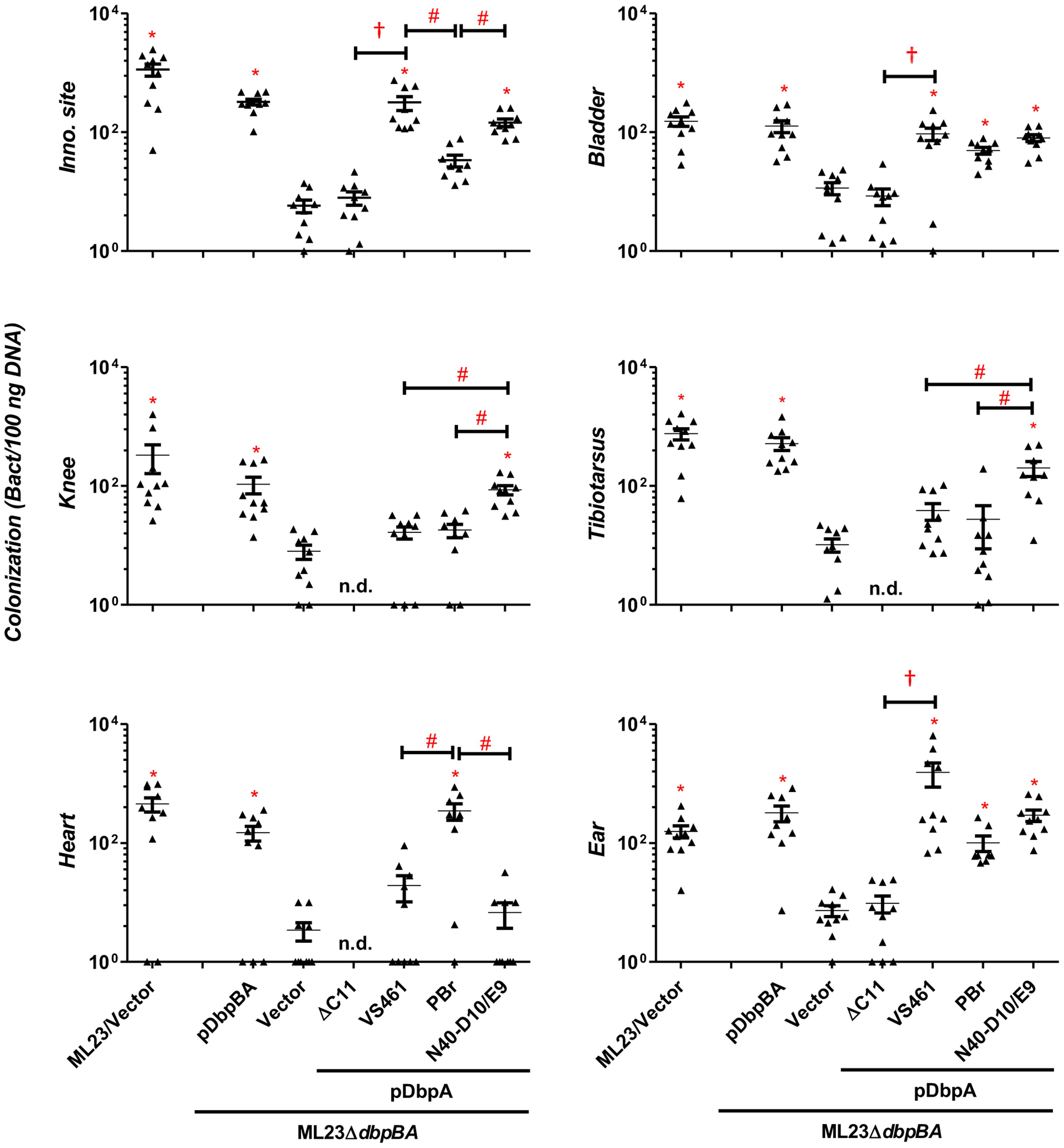 DbpA variants promote distinct <i>B. burgdorferi</i> tissue colonization profiles at 28 days post-infection.
