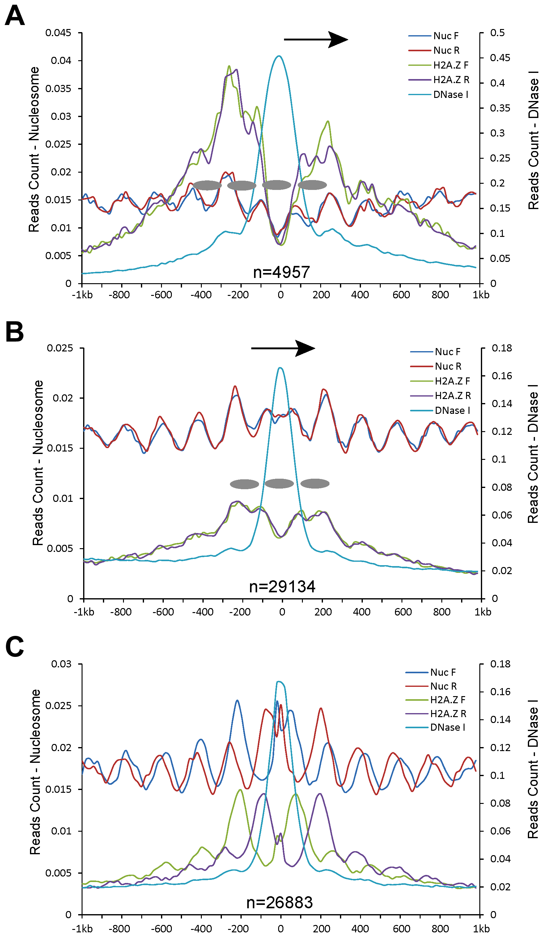 Patterns of nucleosome positioning around DHSs in the human genome.