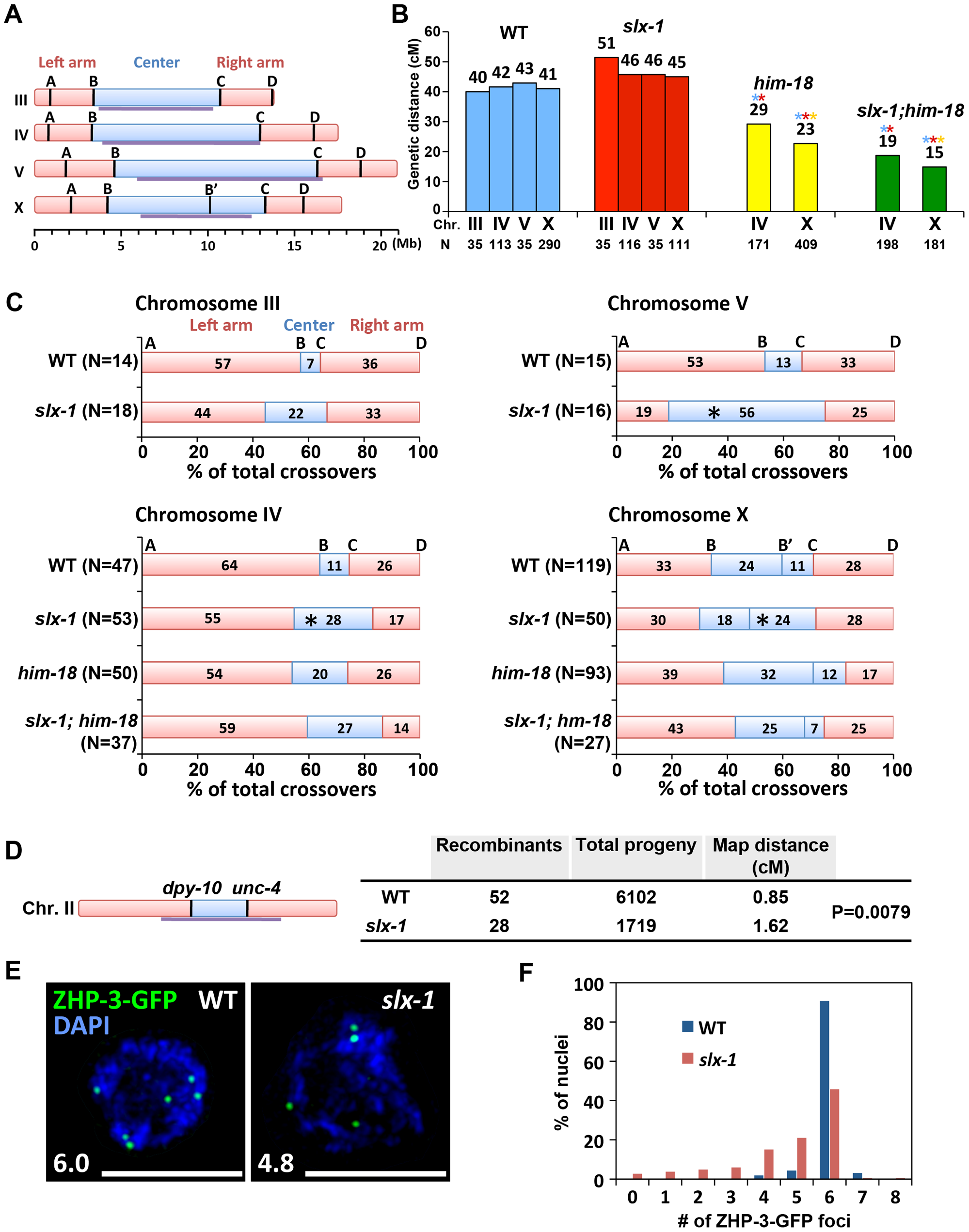 SLX-1 promotes the regulation of crossover distribution but not crossover frequency.