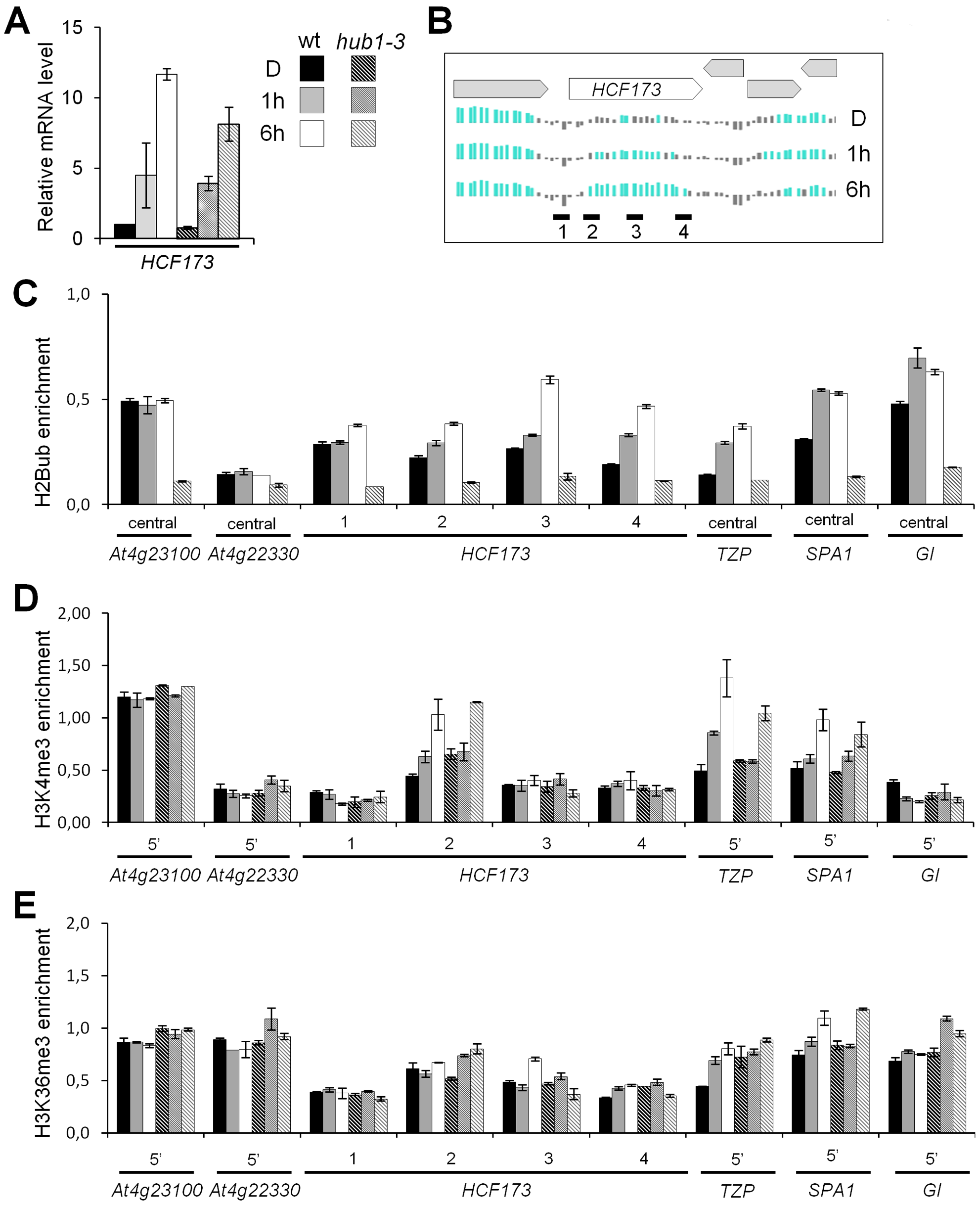 Dynamics of H3K4me3 and H3K36me3 levels on genes exhibiting light-induced H2Bub enrichment.