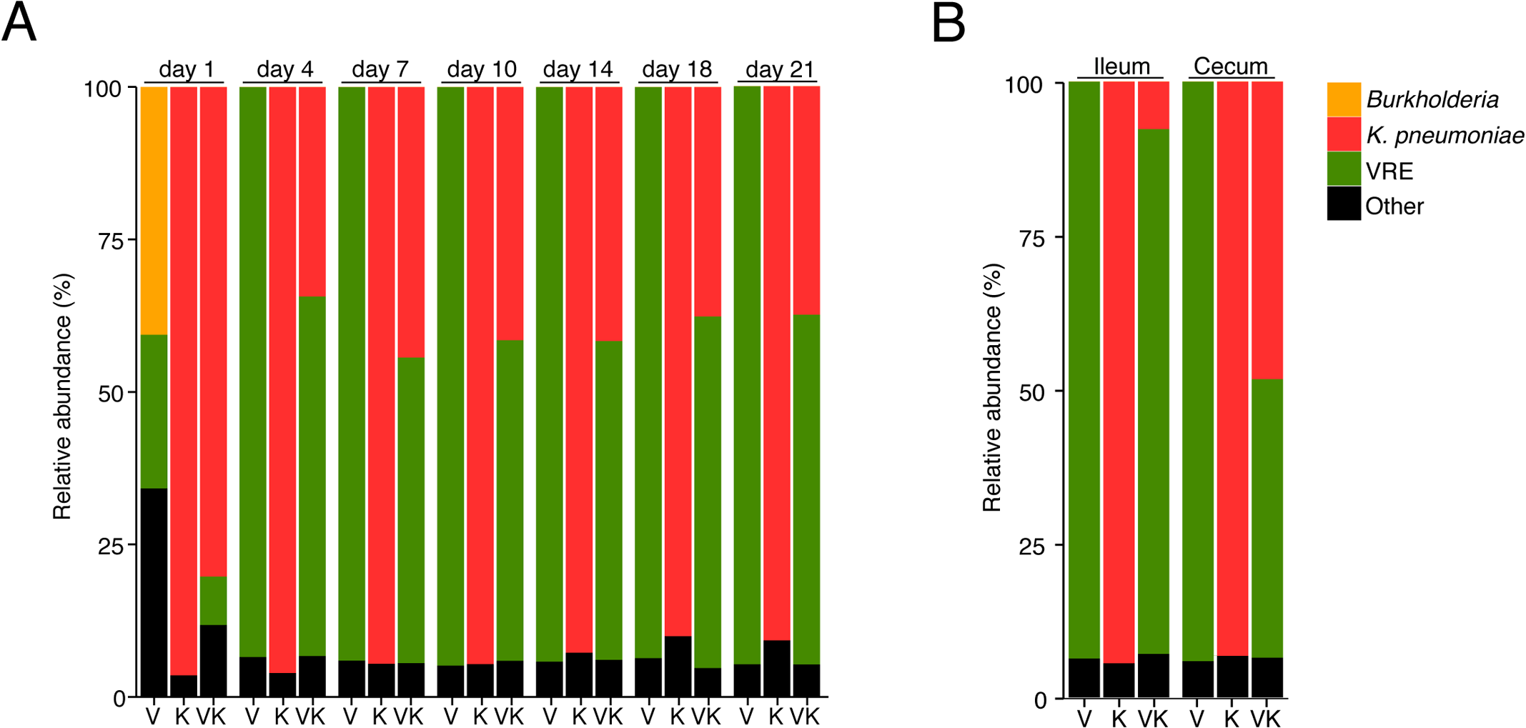<i>K</i>. <i>pneumoniae</i> and VRE achieve similar densities in the large intestine of co-colonized mice.