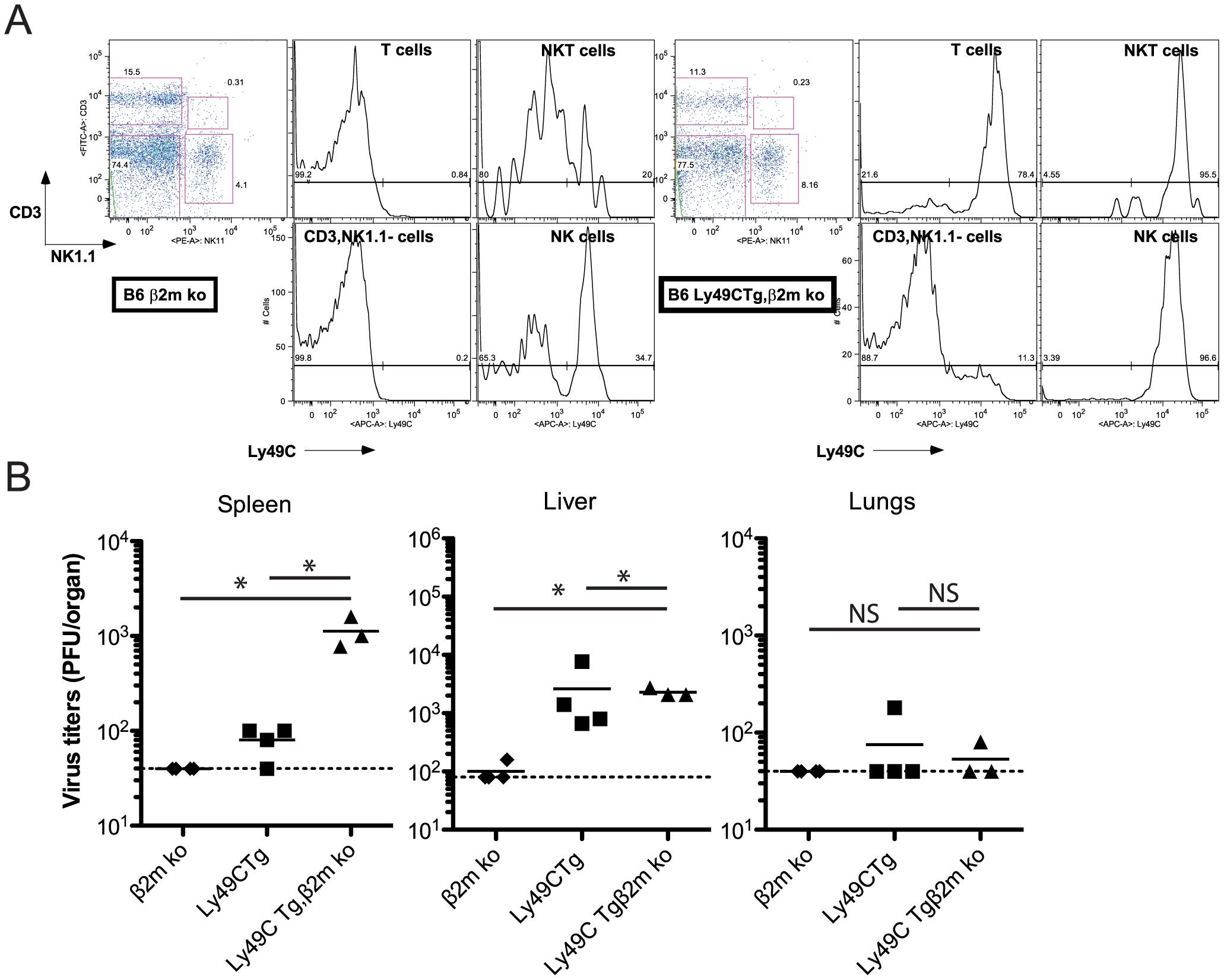 Infection of B6 Ly49C Tg β2m ko mice by MCMVm157<sup>G1F</sup>.