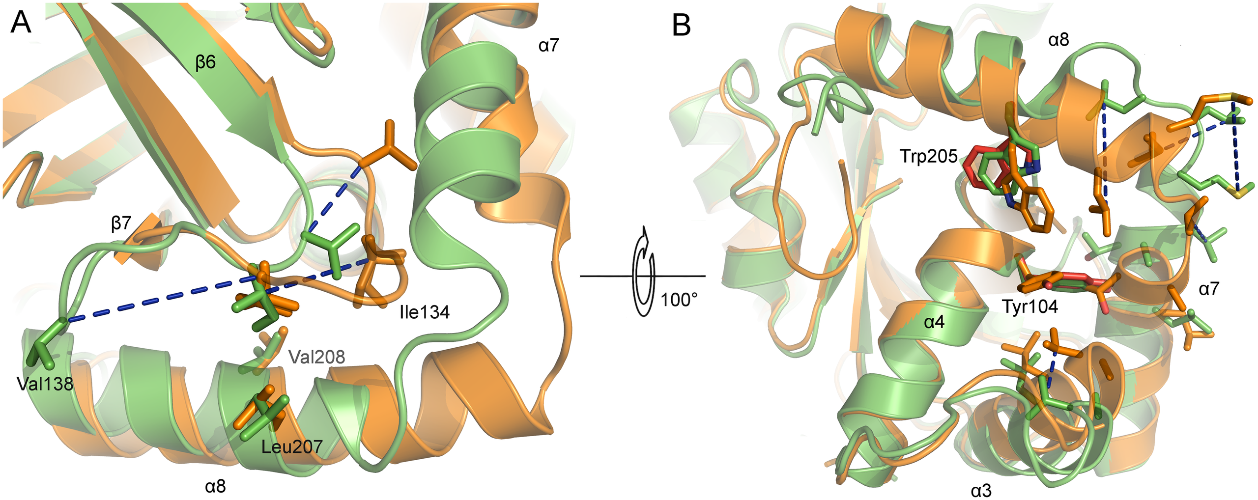 Active site and dimer interface helices of superposed monomers of monomeric and dimeric PrV assemblin.