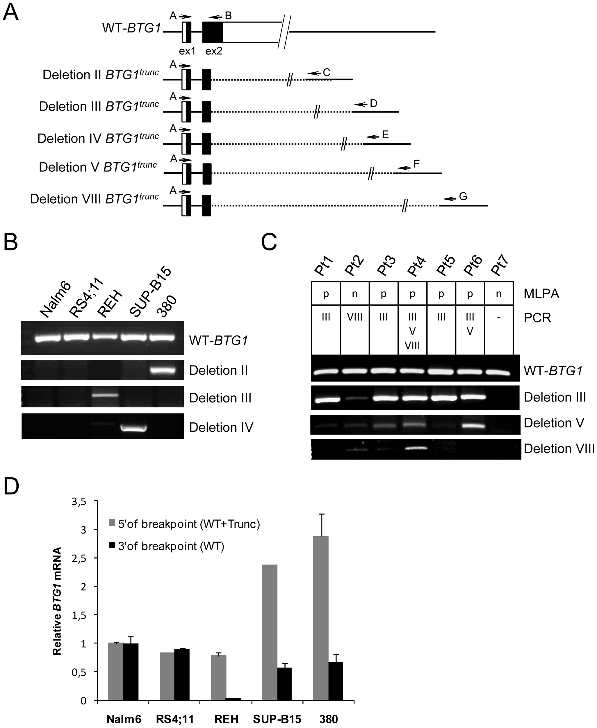 Expression of <i>BTG1</i> truncated read-through transcripts in BCP-ALL cells with <i>BTG1</i> deletions.