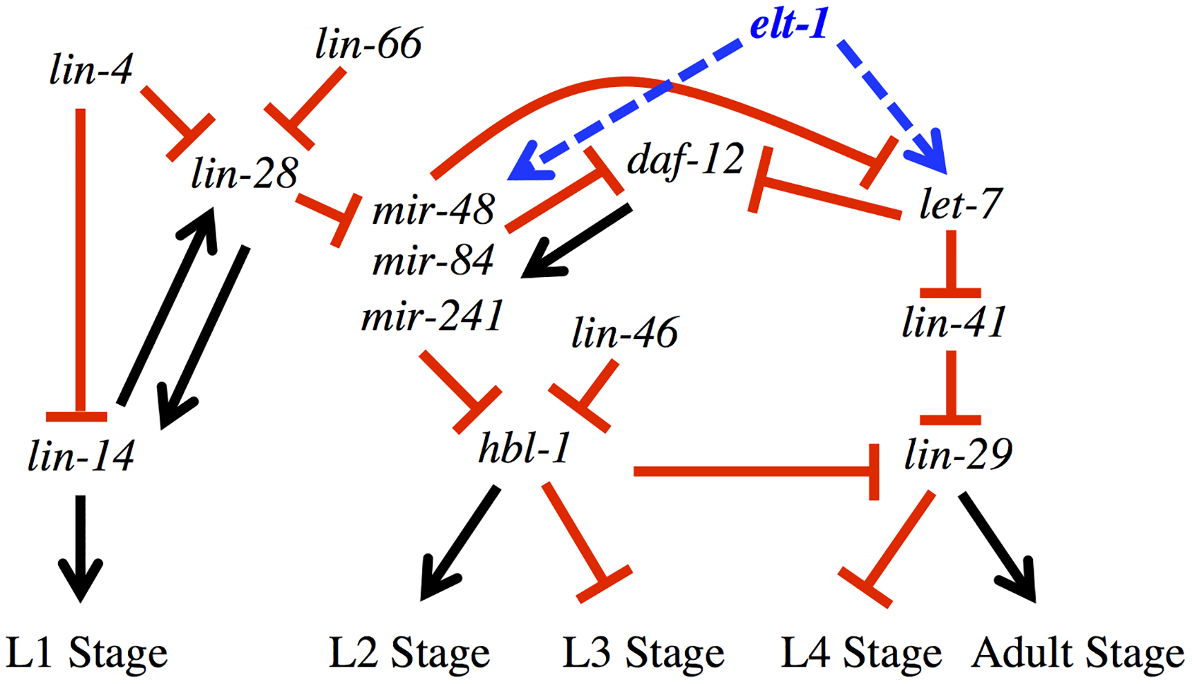 <i>elt-1/GATA</i> promotes the expression of multiple miRNAs that have key roles in the developmental timing regulatory pathway.