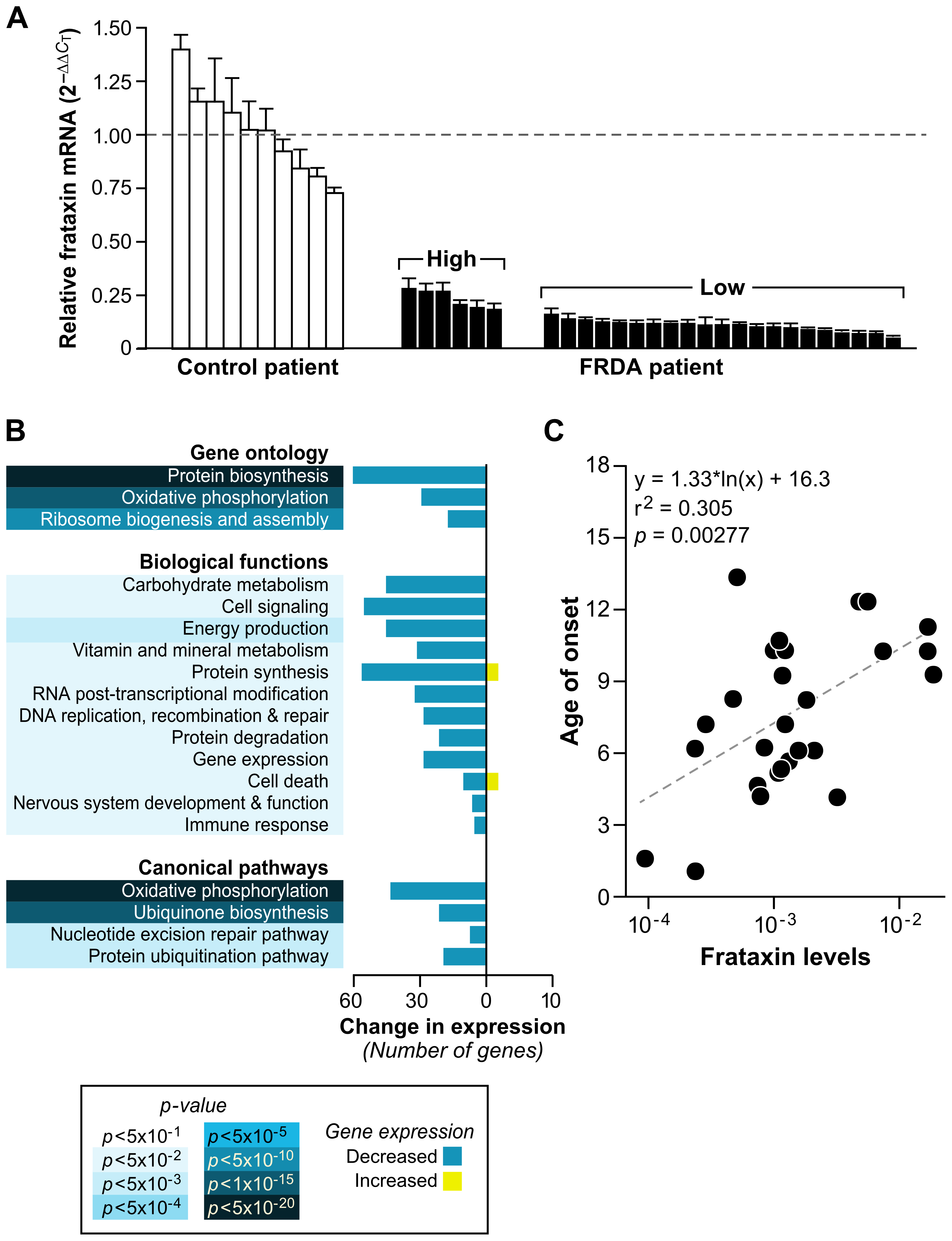 Patients with lower levels of frataxin correlate with age of onset of disease and have more compromised mitochondrial and protein biosynthetic function.