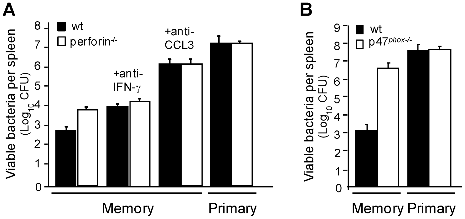 CCL3/ROS<sup>+</sup>-mediated killing of bacteria is a major mechanism of protection in memory mice.